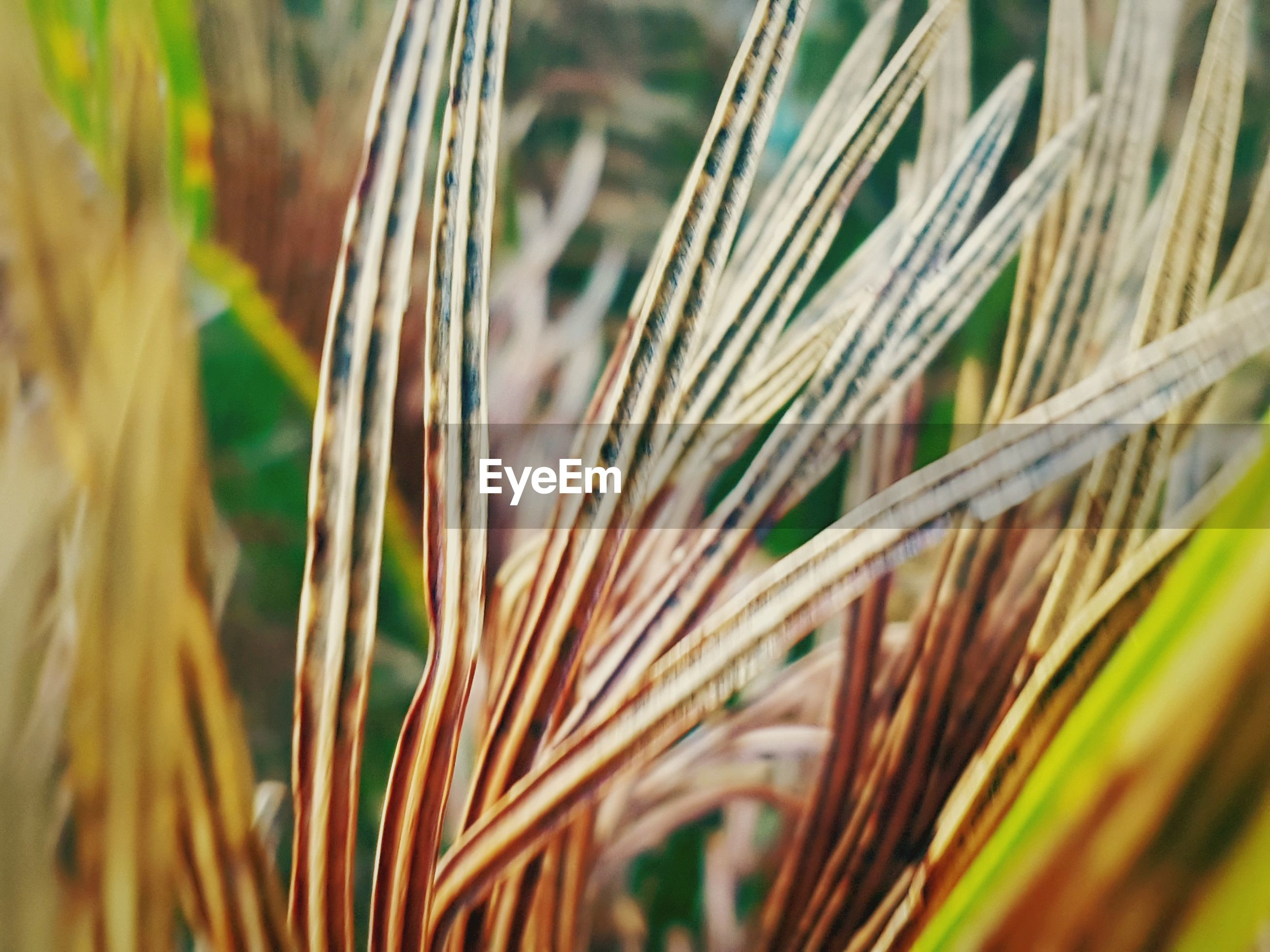 close-up, growth, plant, cereal plant, wheat, nature, no people, backgrounds, day, outdoors, grass