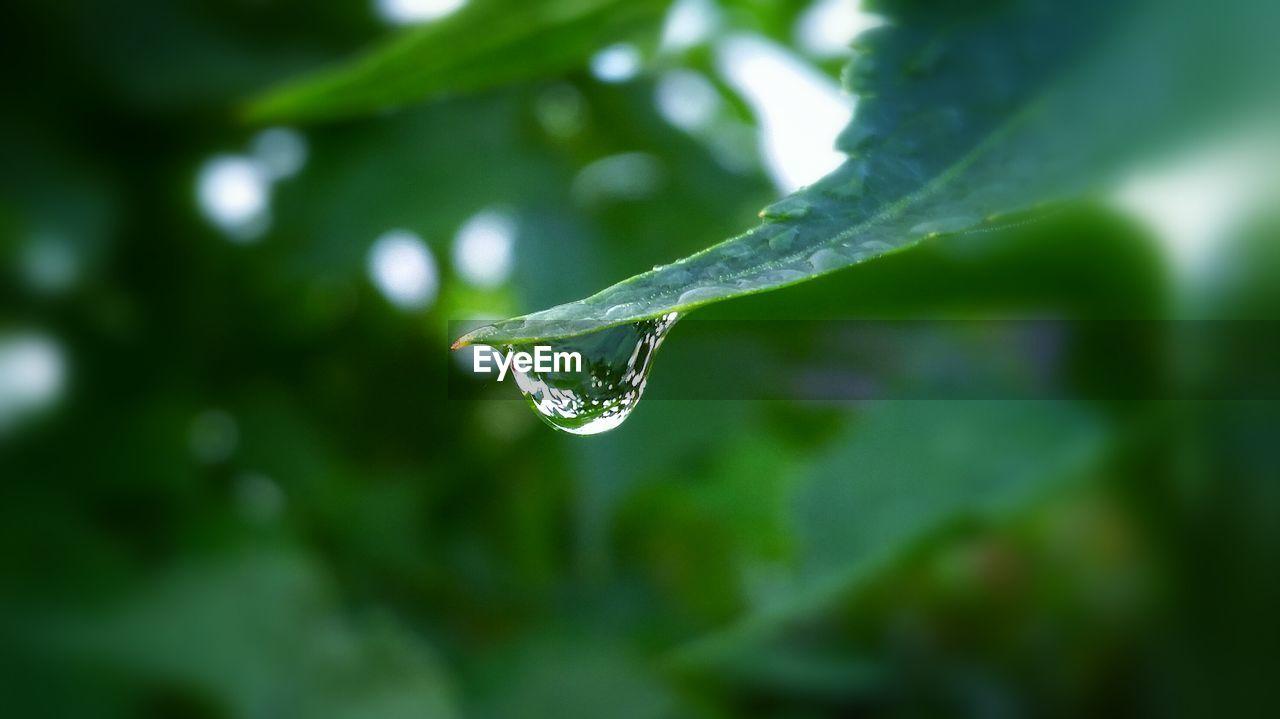 Close-Up Of Drop On Leaf