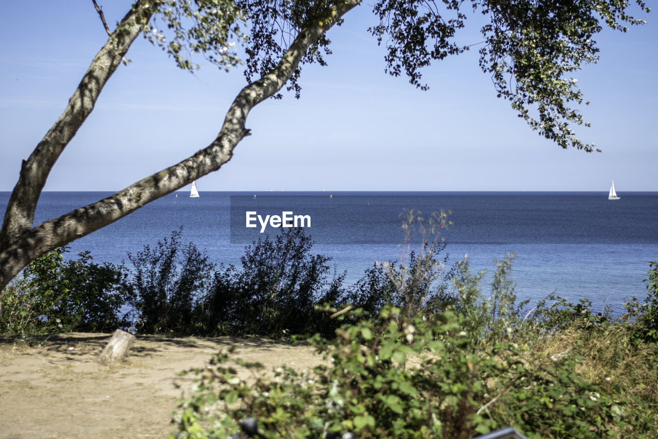 sky, water, tree, sea, plant, beauty in nature, tranquility, scenics - nature, horizon over water, land, nature, tranquil scene, horizon, beach, no people, clear sky, growth, day, blue, outdoors