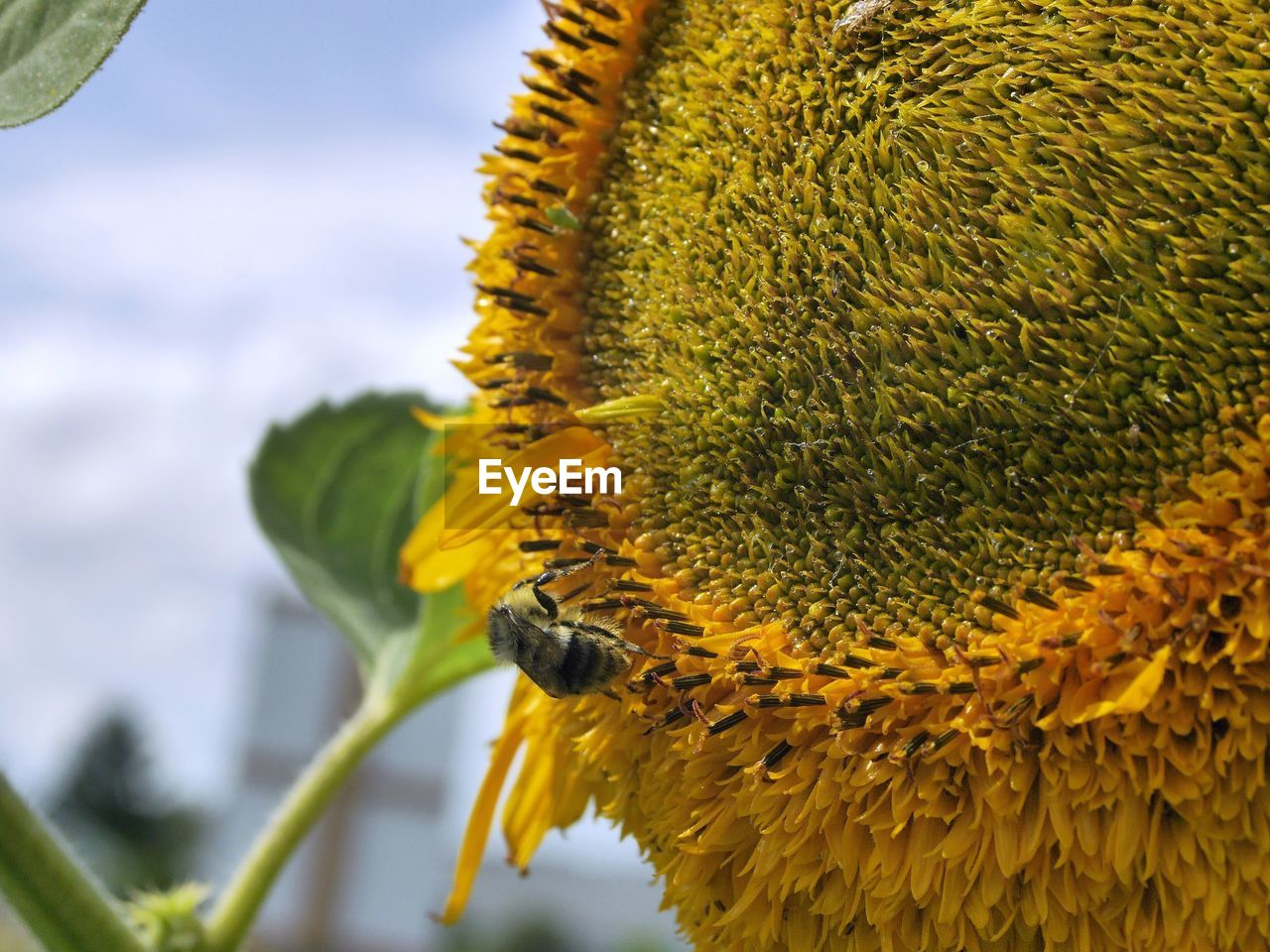 flower, yellow, flowering plant, one animal, flower head, petal, animal themes, invertebrate, close-up, plant, animal wildlife, animals in the wild, beauty in nature, growth, animal, fragility, insect, vulnerability, bee, sunflower, pollen, pollination, no people, outdoors