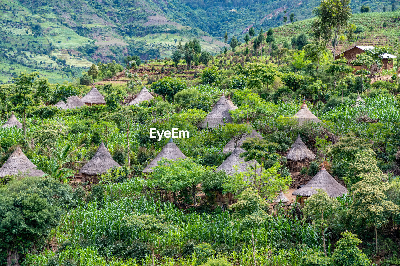 PLANTS GROWING ON LAND