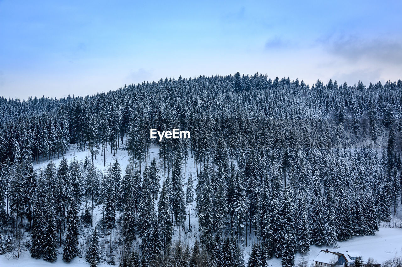 tree, cold temperature, winter, snow, plant, beauty in nature, sky, scenics - nature, tranquil scene, tranquility, nature, non-urban scene, no people, day, forest, land, covering, cloud - sky, growth, outdoors, woodland, pine tree, coniferous tree, snowcapped mountain