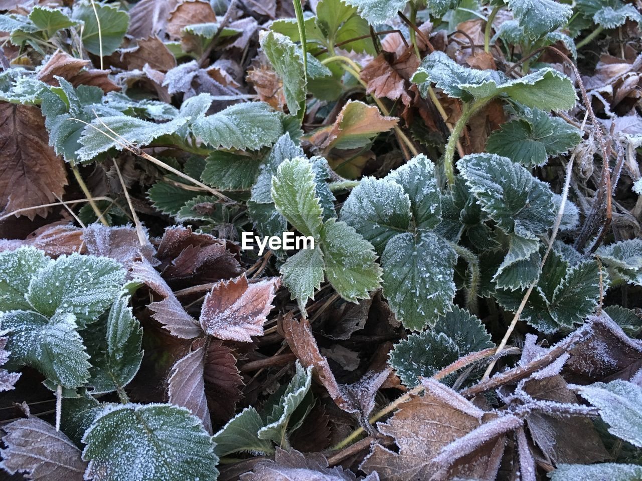plant, growth, green color, leaf, nature, no people, day, outdoors, close-up, full frame, backgrounds, fragility, beauty in nature, winter, snow, cold temperature, freshness