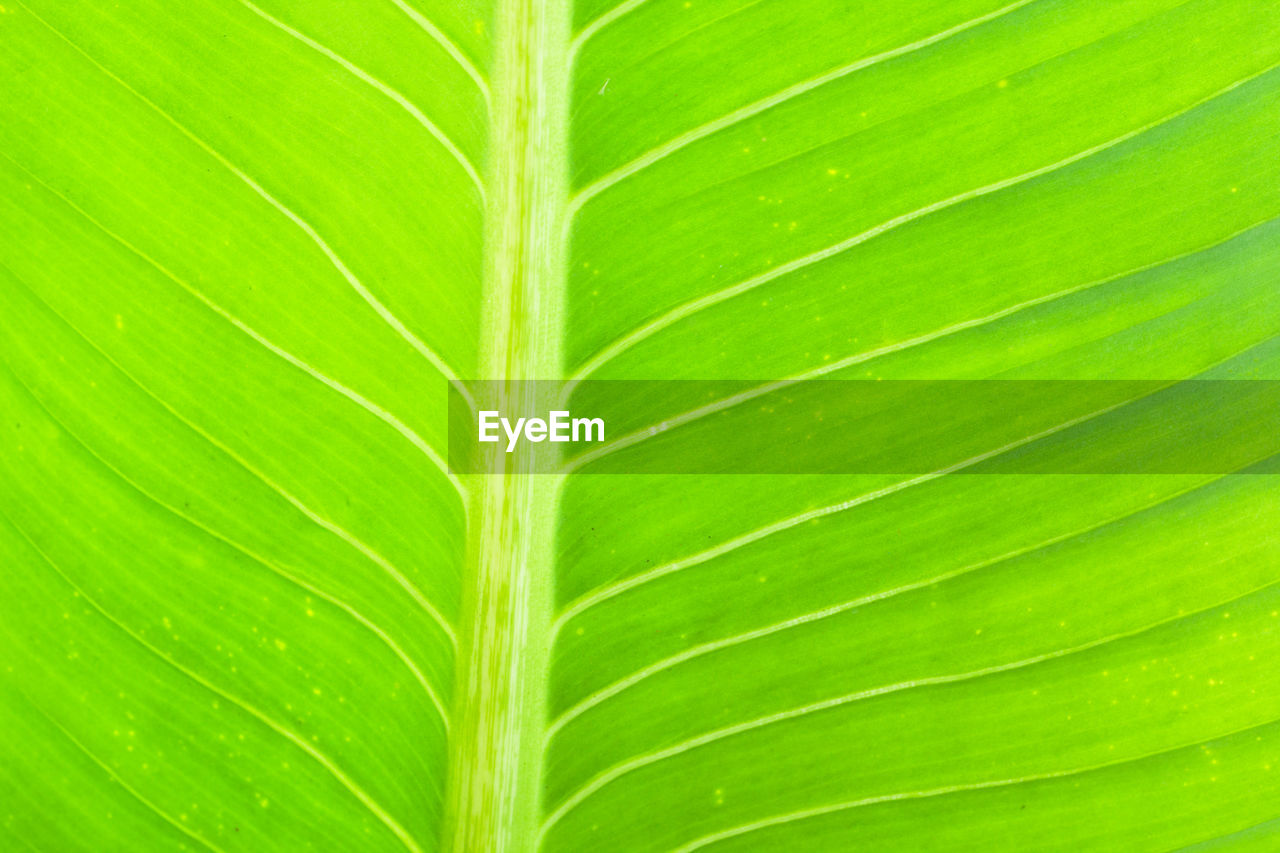 green color, leaf, plant part, full frame, backgrounds, close-up, plant, no people, growth, leaf vein, natural pattern, nature, pattern, beauty in nature, textured, outdoors, freshness, day, botany, palm leaf, leaves