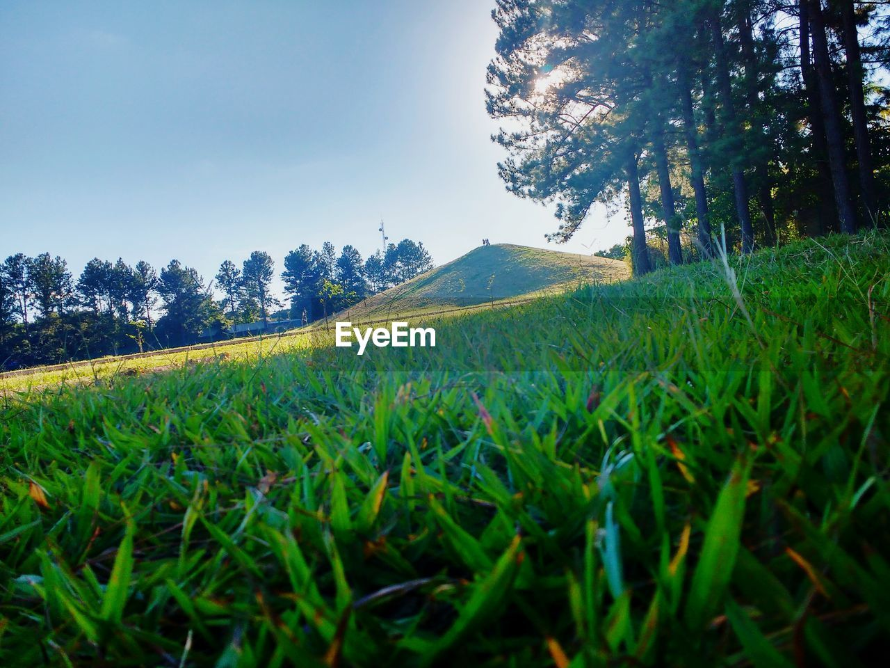grass, growth, nature, field, tree, tranquil scene, tranquility, green color, landscape, beauty in nature, green, scenics, agriculture, no people, day, rural scene, outdoors, sky, clear sky