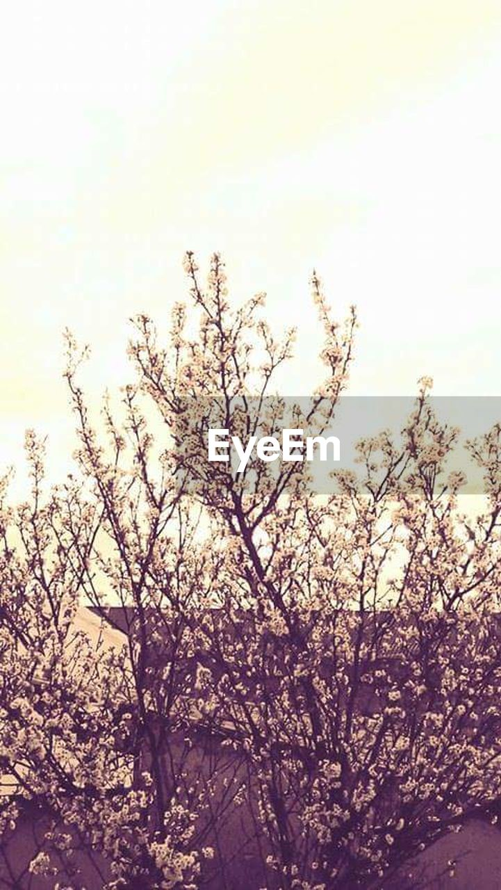 tree, nature, flower, blossom, branch, beauty in nature, outdoors, growth, low angle view, no people, sky, springtime, fragility, day, freshness, close-up