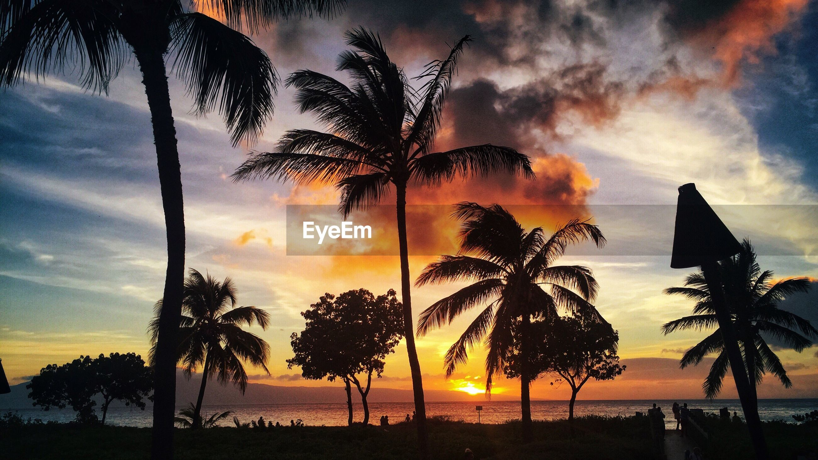 SILHOUETTE PALM TREES AGAINST SKY AT SUNSET