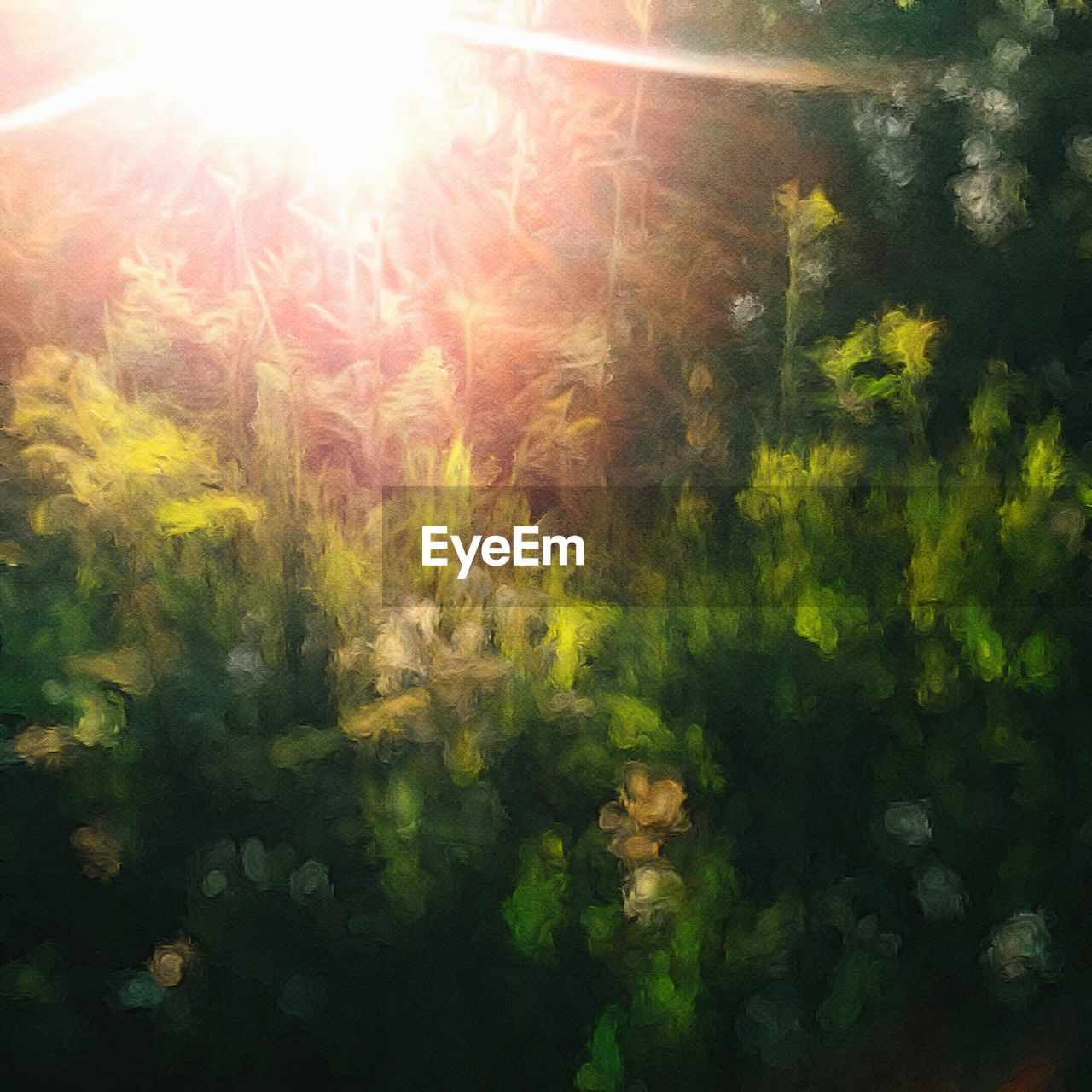 sunbeam, lens flare, sun, sunlight, nature, plant, growth, beauty in nature, no people, day, outdoors, forest, tree, close-up, freshness