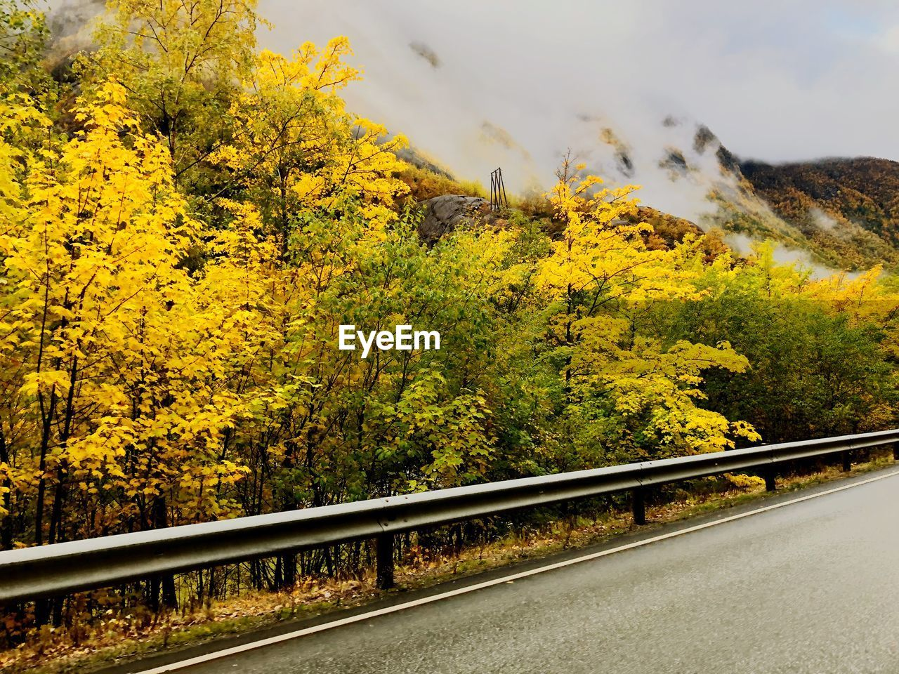 plant, transportation, tree, yellow, beauty in nature, road, nature, no people, day, growth, mountain, scenics - nature, tranquility, sky, outdoors, tranquil scene, non-urban scene, railing, autumn, environment, change, crash barrier