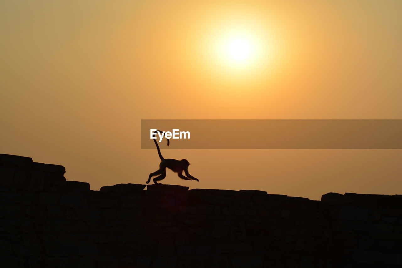 Silhouette Monkey Jumping On Wall Against Orange Sky