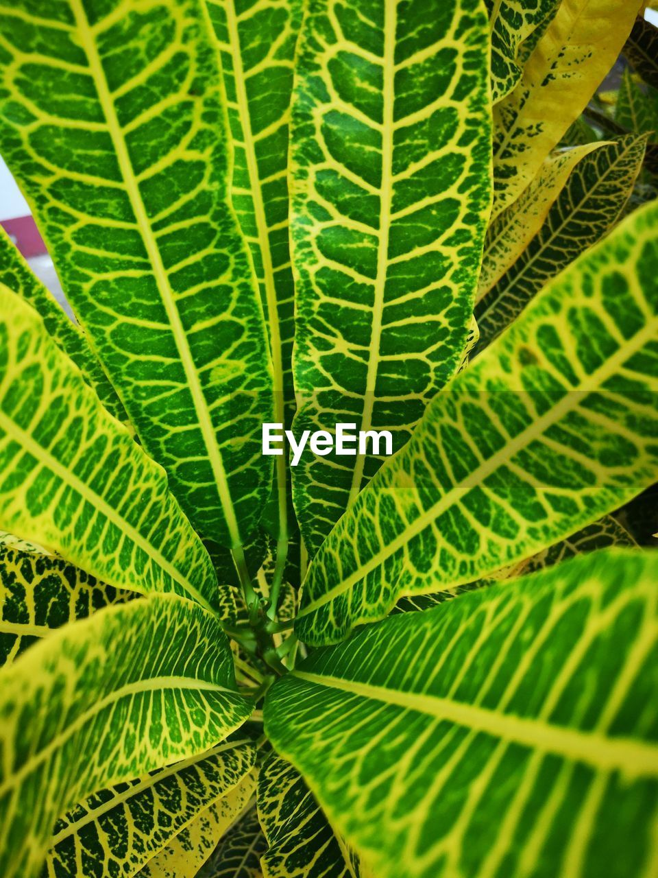leaf, plant part, green color, plant, growth, nature, beauty in nature, close-up, backgrounds, full frame, no people, day, natural pattern, leaf vein, freshness, botany, outdoors, sunlight, fern, selective focus, leaves, palm leaf