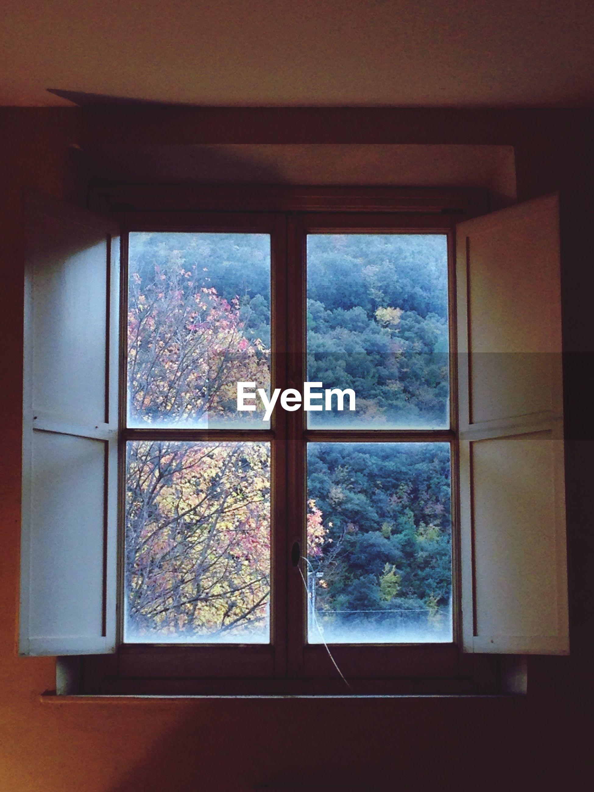 Trees seen through window