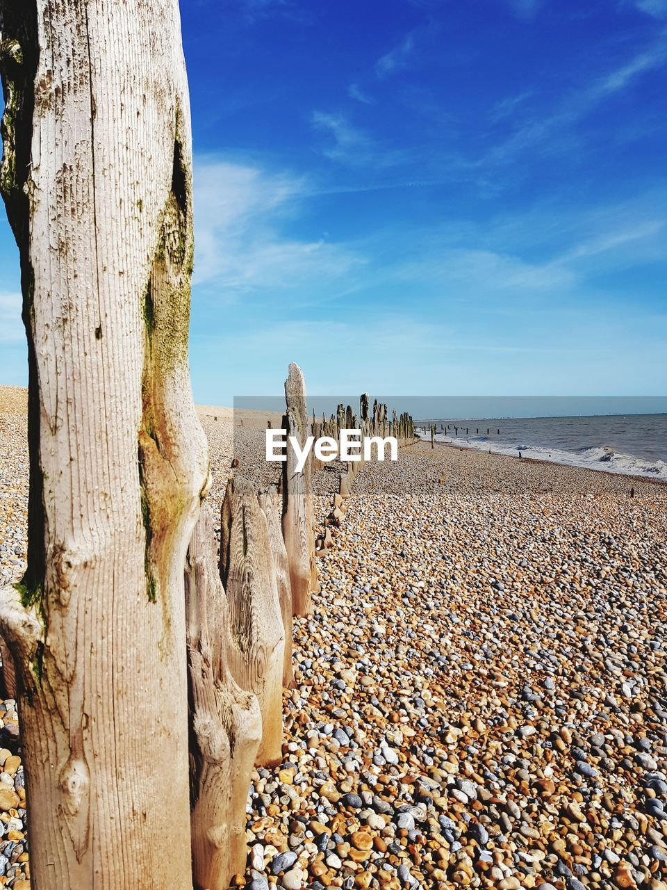 land, sky, beach, sea, tranquility, scenics - nature, beauty in nature, nature, water, tree, day, tree trunk, wood - material, tranquil scene, trunk, sunlight, plant, horizon over water, horizon, no people, pebble, wooden post