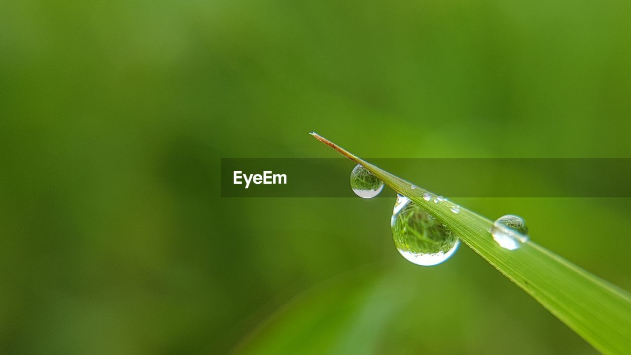 green color, nature, drop, close-up, fragility, no people, focus on foreground, beauty in nature, day, plant, leaf, growth, outdoors, grass, freshness, water, animal themes