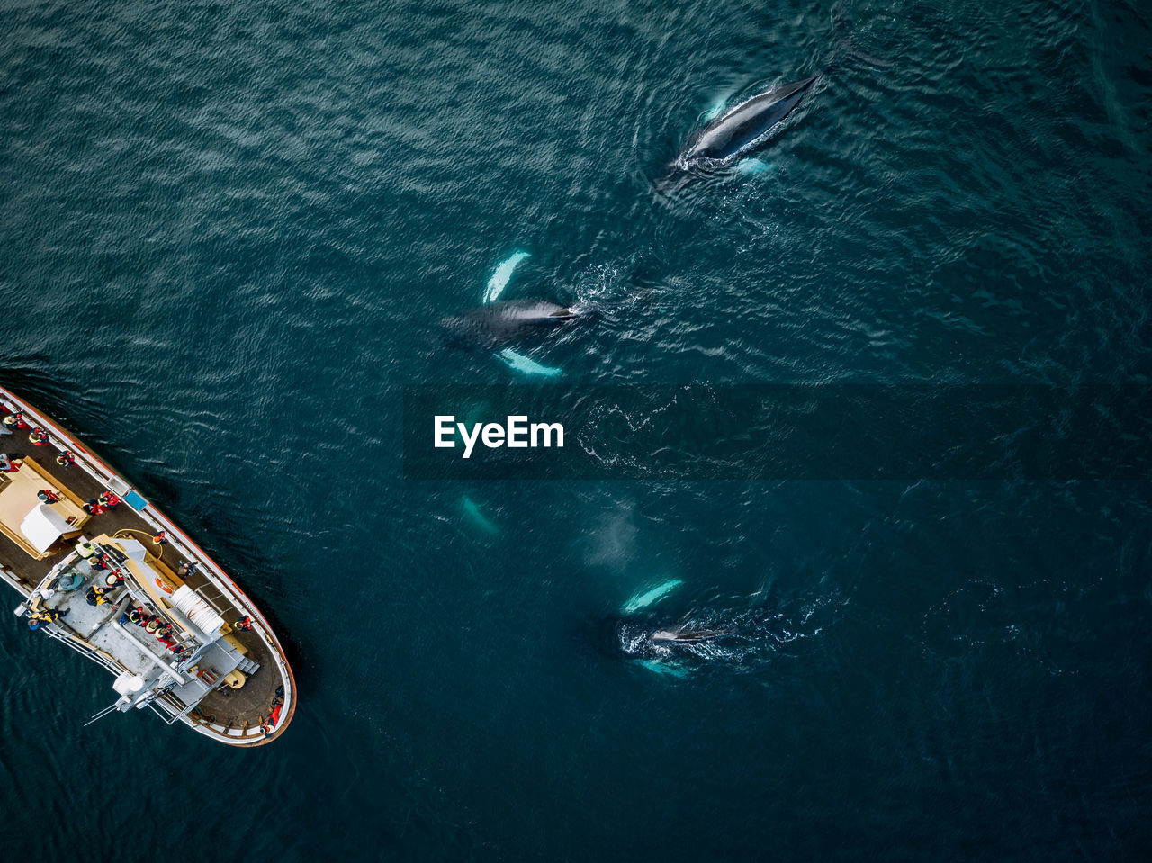 Aerial view of killer whales swimming by boat in sea