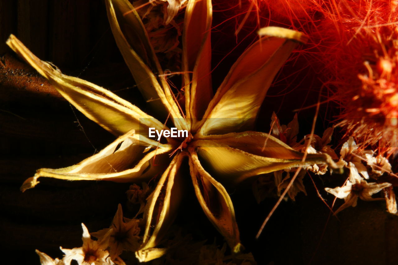 flower, close-up, flower head, petal, fragility, plant, no people, night, beauty in nature, nature, growth, outdoors, freshness