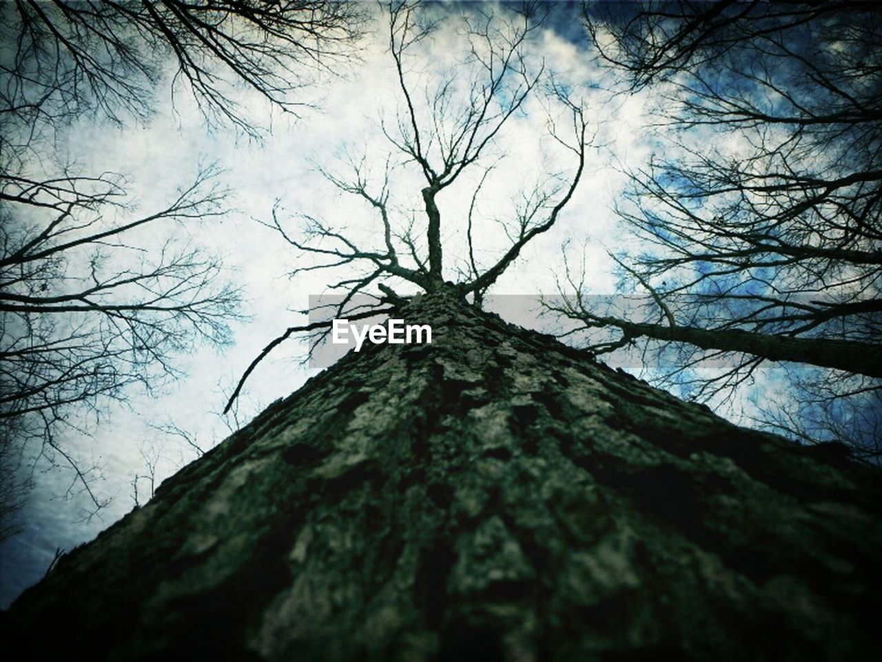 tree, tree trunk, bare tree, low angle view, branch, nature, day, outdoors, tranquility, beauty in nature, no people, forest, sky