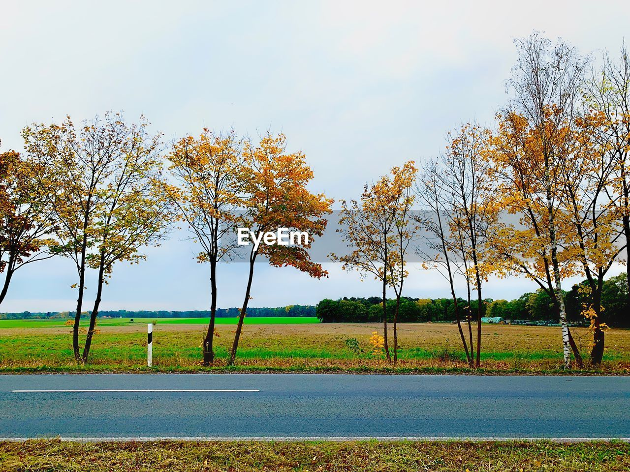 tree, plant, beauty in nature, sky, tranquility, landscape, tranquil scene, scenics - nature, environment, growth, nature, land, field, day, autumn, no people, grass, outdoors, road, rural scene, change