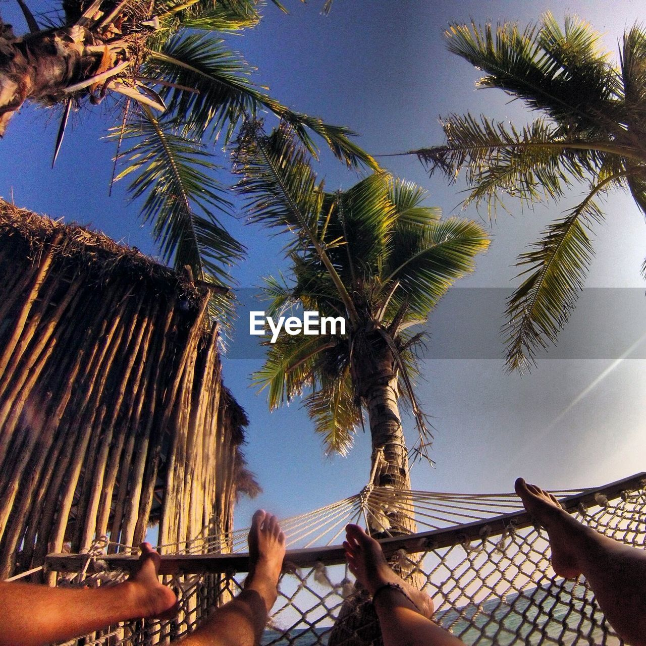 Low Section Of Man And Woman On Hammock Against Palm Trees