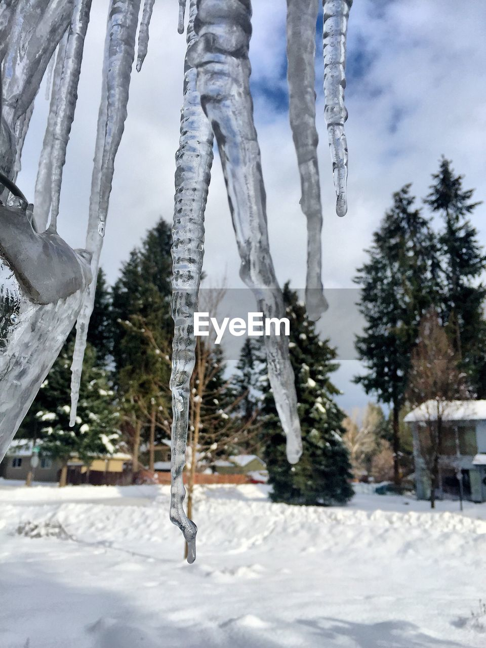 winter, snow, cold temperature, weather, frozen, nature, cold, tree, icicle, ice, day, beauty in nature, outdoors, landscape, no people, scenics, sky, close-up