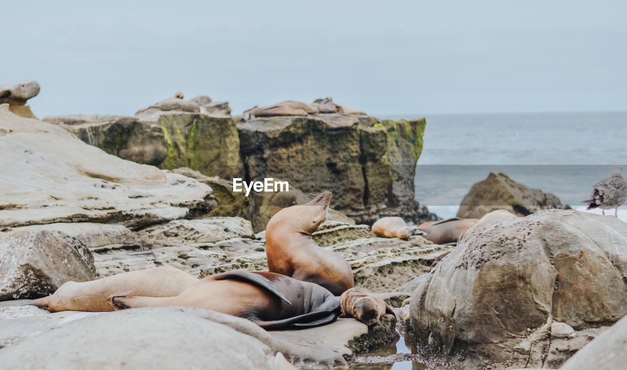 MAN LYING ON ROCKS AT BEACH AGAINST SKY