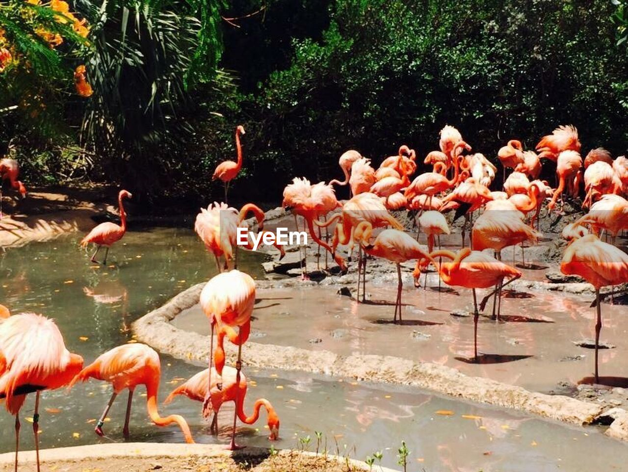 animals in the wild, bird, animal themes, animal wildlife, animal, vertebrate, group of animals, flamingo, water, lake, large group of animals, no people, nature, day, reflection, beauty in nature, orange color, plant, zoology, pink color, outdoors, flock of birds, freshwater bird, animal neck