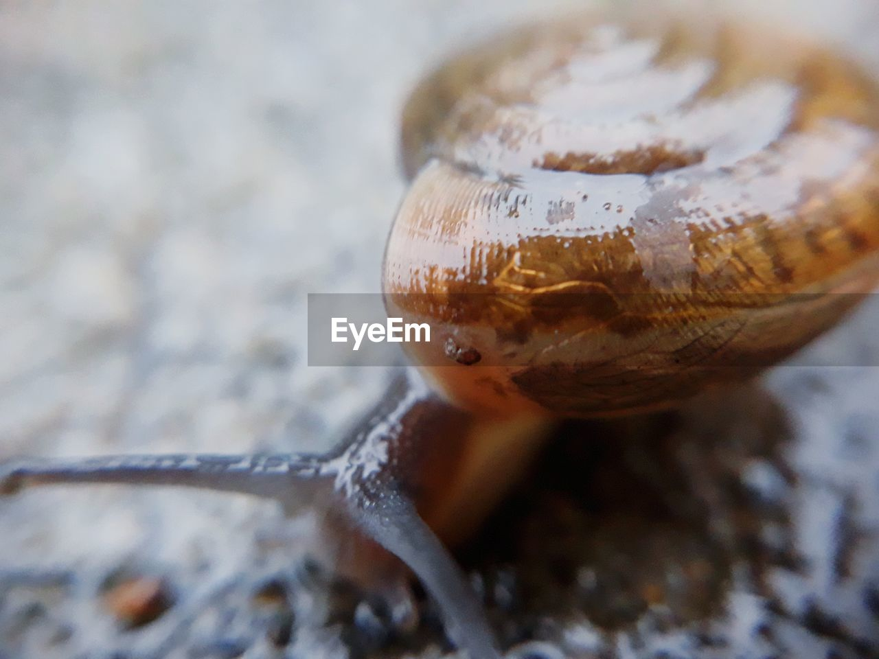 animal themes, one animal, animal, animal wildlife, close-up, animals in the wild, no people, selective focus, gastropod, focus on foreground, nature, glass - material, outdoors, day, transparent, animal body part, mollusk, reptile, reflection, snail, small, animal eye