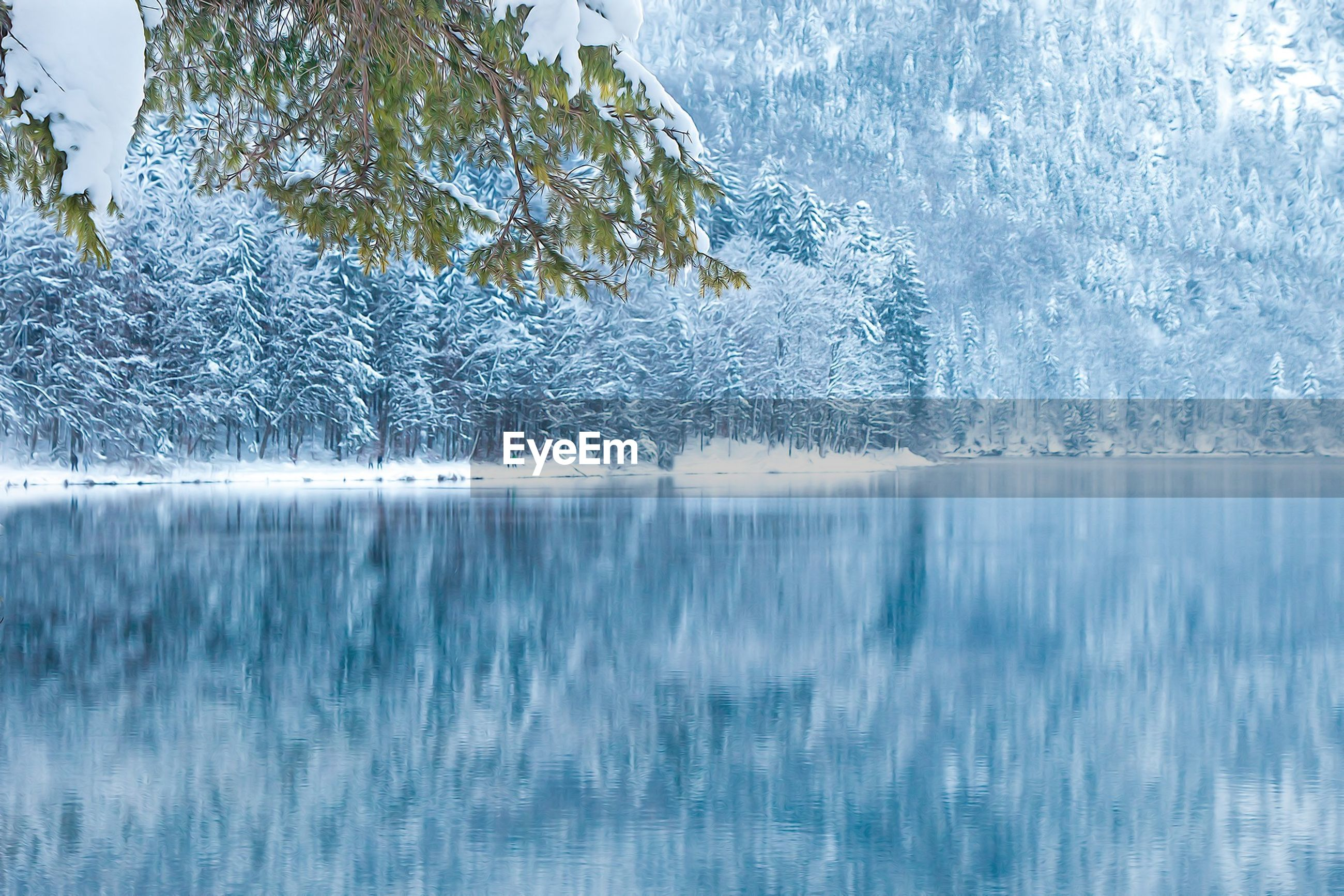 water, beauty in nature, reflection, waterfront, cold temperature, winter, tranquility, scenics, nature, tranquil scene, lake, snow, ice, frozen, season, idyllic, day, tree, outdoors, blue