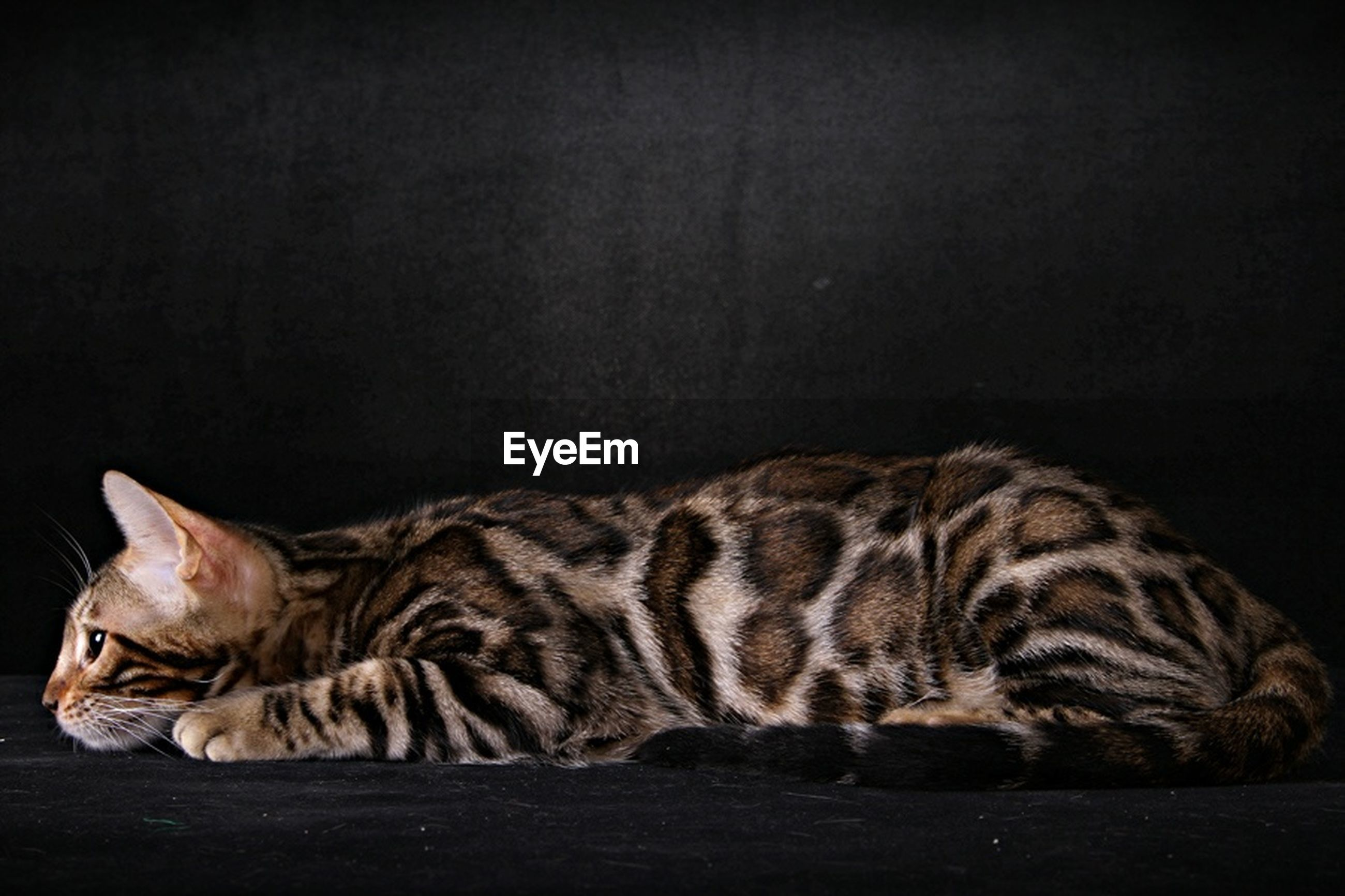 animal themes, one animal, domestic cat, mammal, cat, relaxation, feline, resting, pets, lying down, domestic animals, whisker, sleeping, side view, indoors, close-up, eyes closed, no people, relaxing, looking away