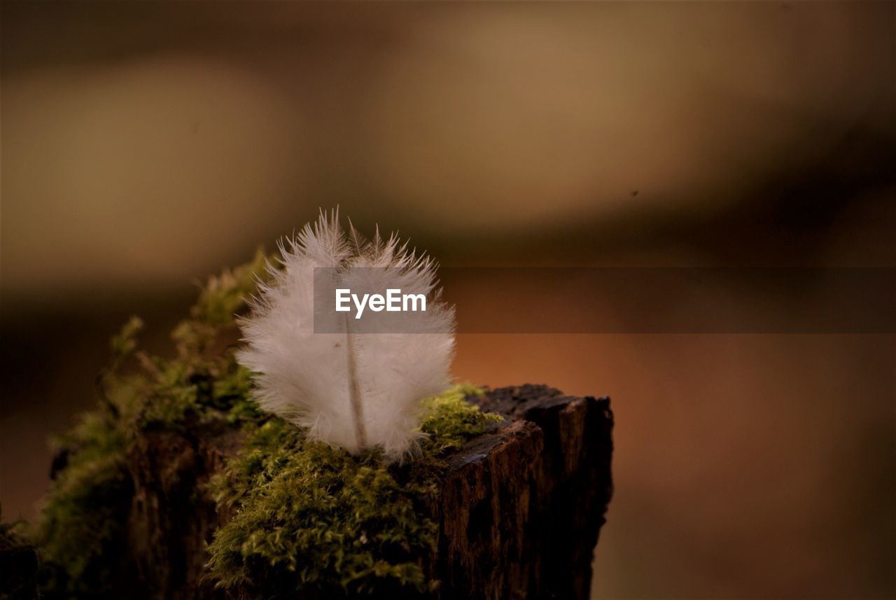 close-up, plant, nature, no people, focus on foreground, fragility, vulnerability, beauty in nature, selective focus, softness, day, growth, outdoors, white color, dandelion, wood - material, tree, tranquility, lightweight, flower, dandelion seed