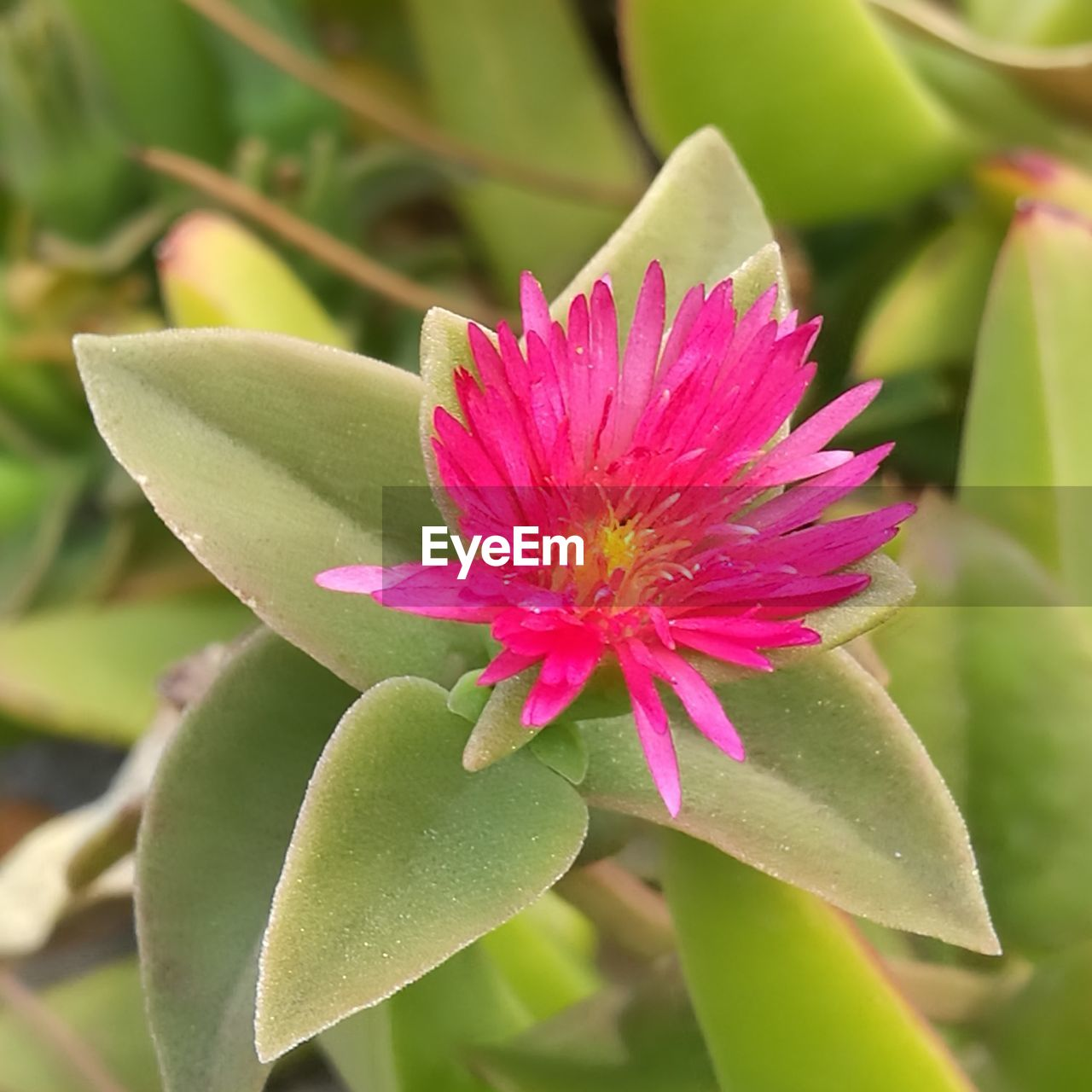 flower, beauty in nature, growth, fragility, petal, nature, flower head, freshness, green color, pink color, leaf, plant, close-up, day, blooming, no people, focus on foreground, outdoors