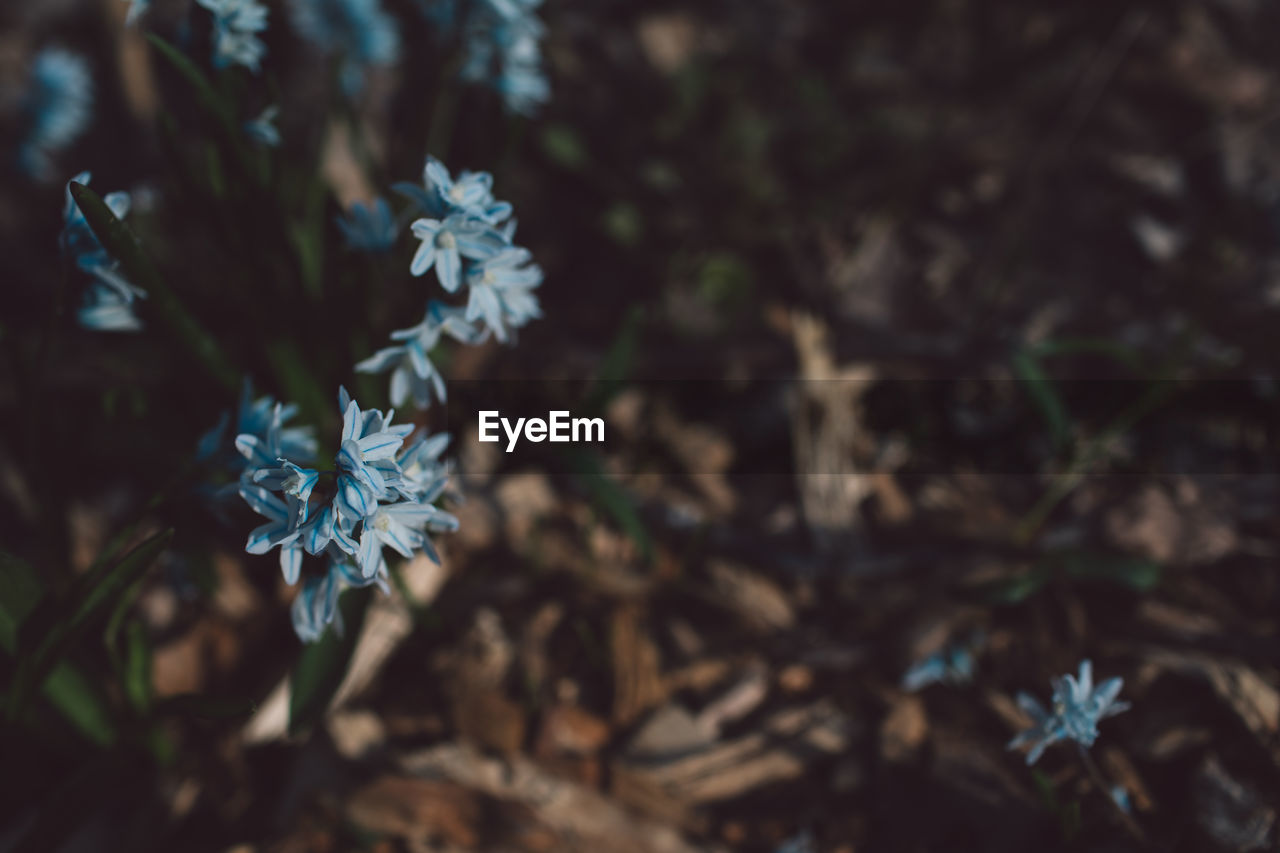 plant, growth, beauty in nature, vulnerability, fragility, flower, flowering plant, freshness, nature, close-up, selective focus, day, no people, high angle view, focus on foreground, land, petal, outdoors, tranquility, flower head