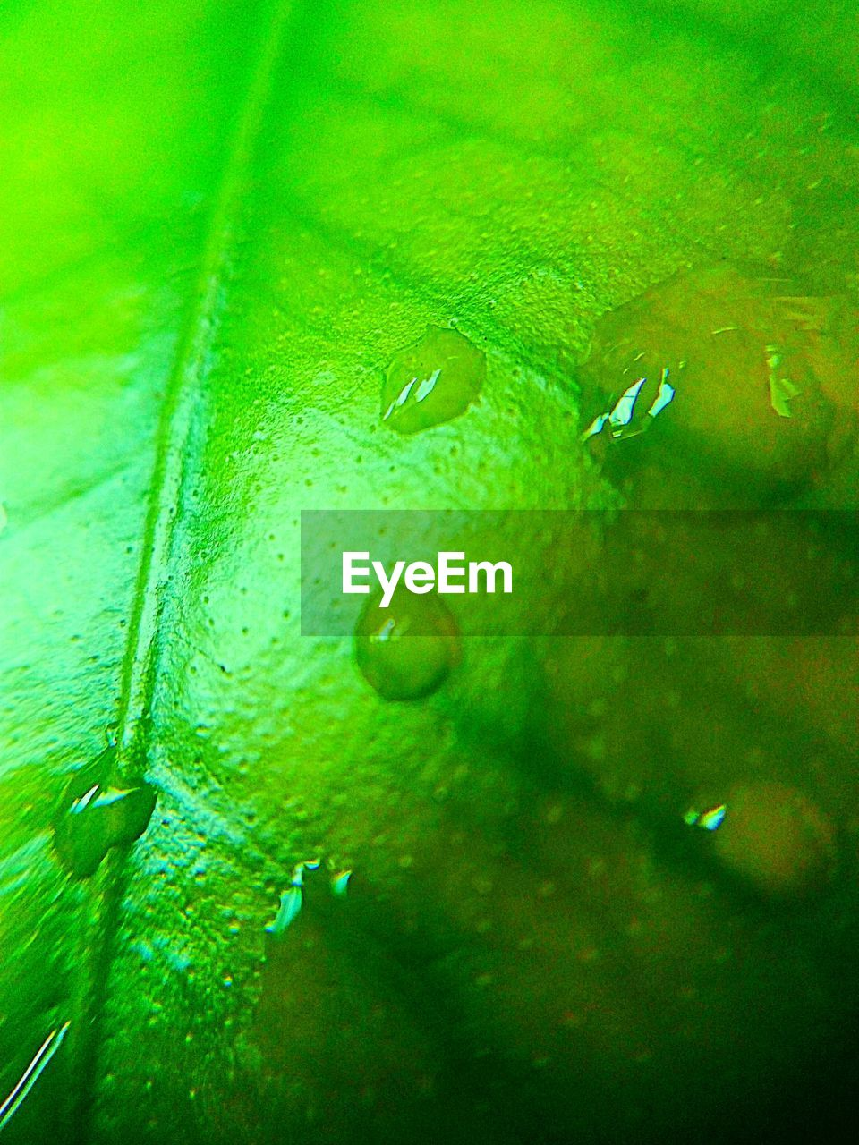 drop, water, green color, wet, nature, close-up, raindrop, no people, leaf, full frame, freshness, beauty in nature, purity, underwater, backgrounds, fragility, animal themes, day, undersea, splashing droplet, outdoors