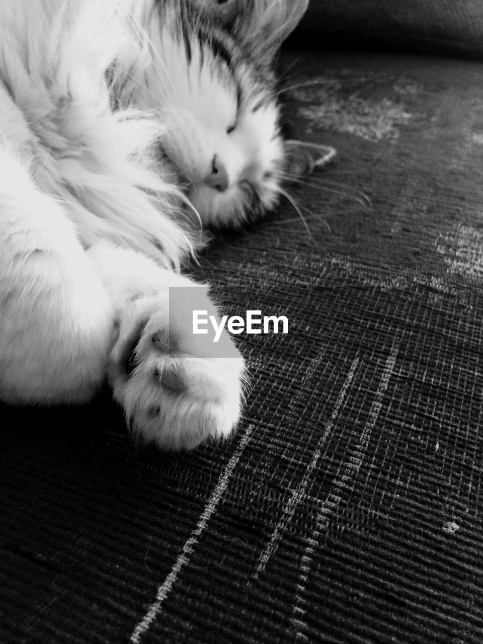 domestic, pets, one animal, mammal, animal themes, animal, domestic animals, cat, domestic cat, feline, vertebrate, relaxation, resting, indoors, close-up, no people, animal body part, sleeping, lying down, whisker