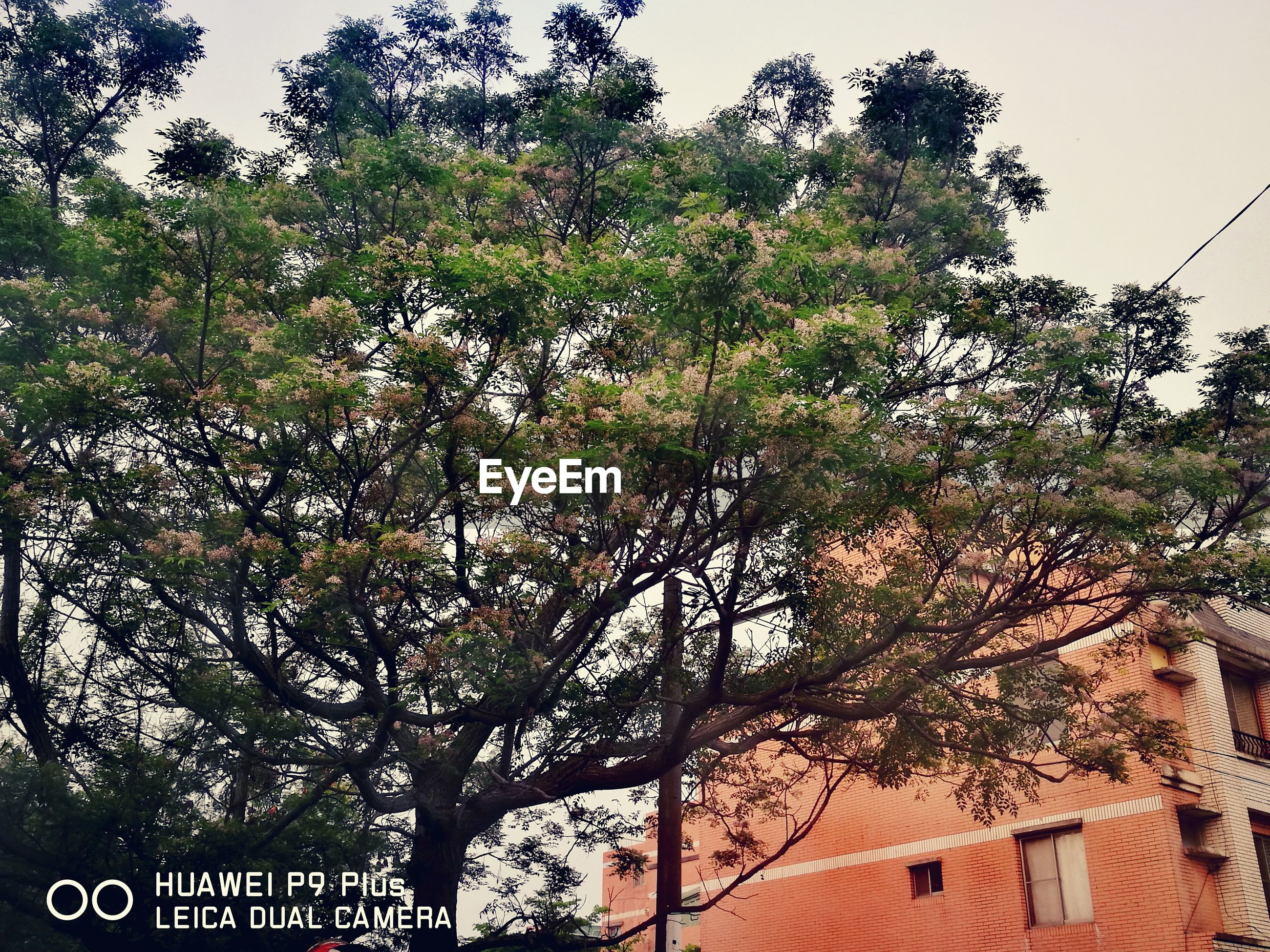 tree, low angle view, no people, nature, branch, outdoors, beauty in nature, sky, day