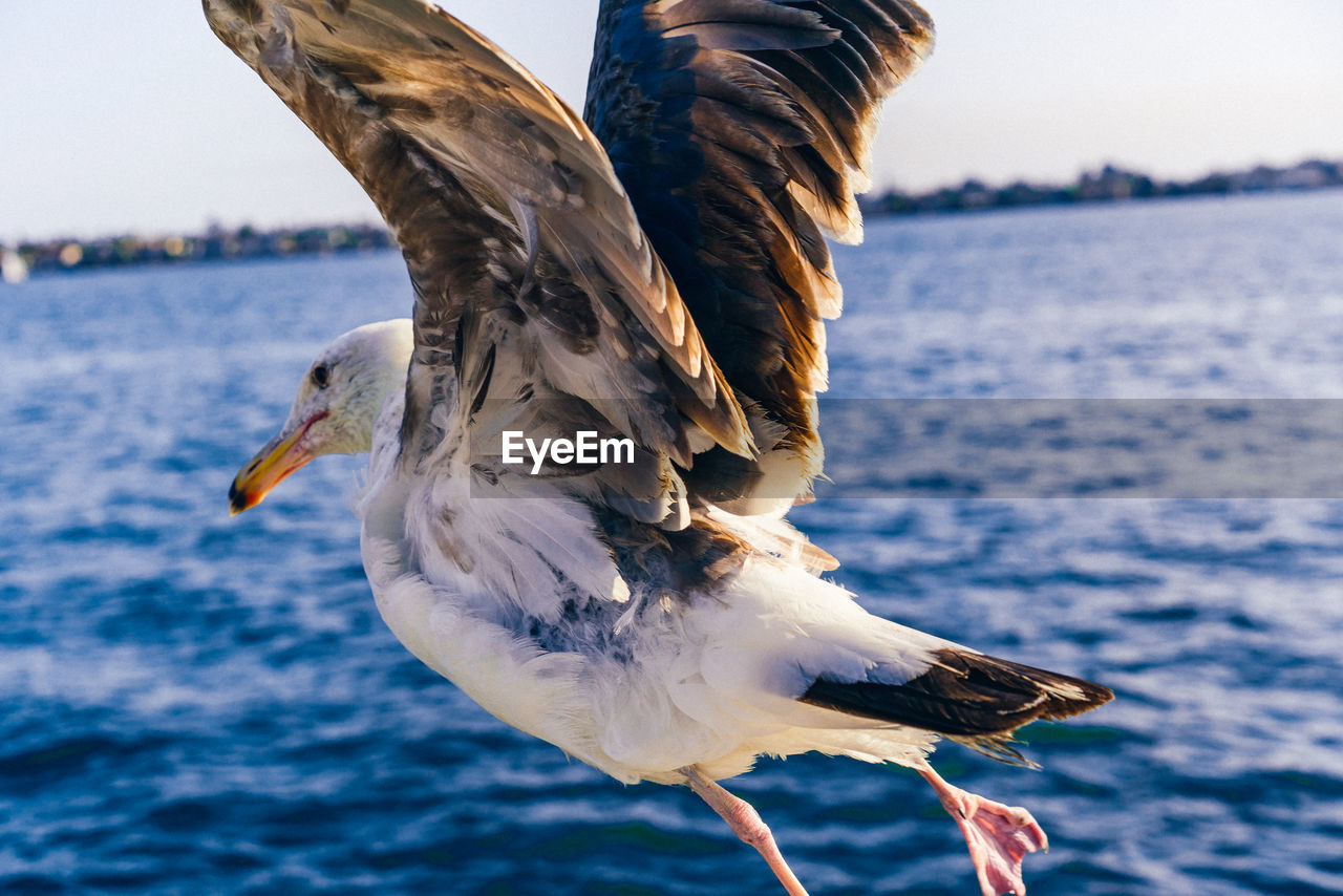 Close-Up Of Seagull Flying Over Sea Against Sky