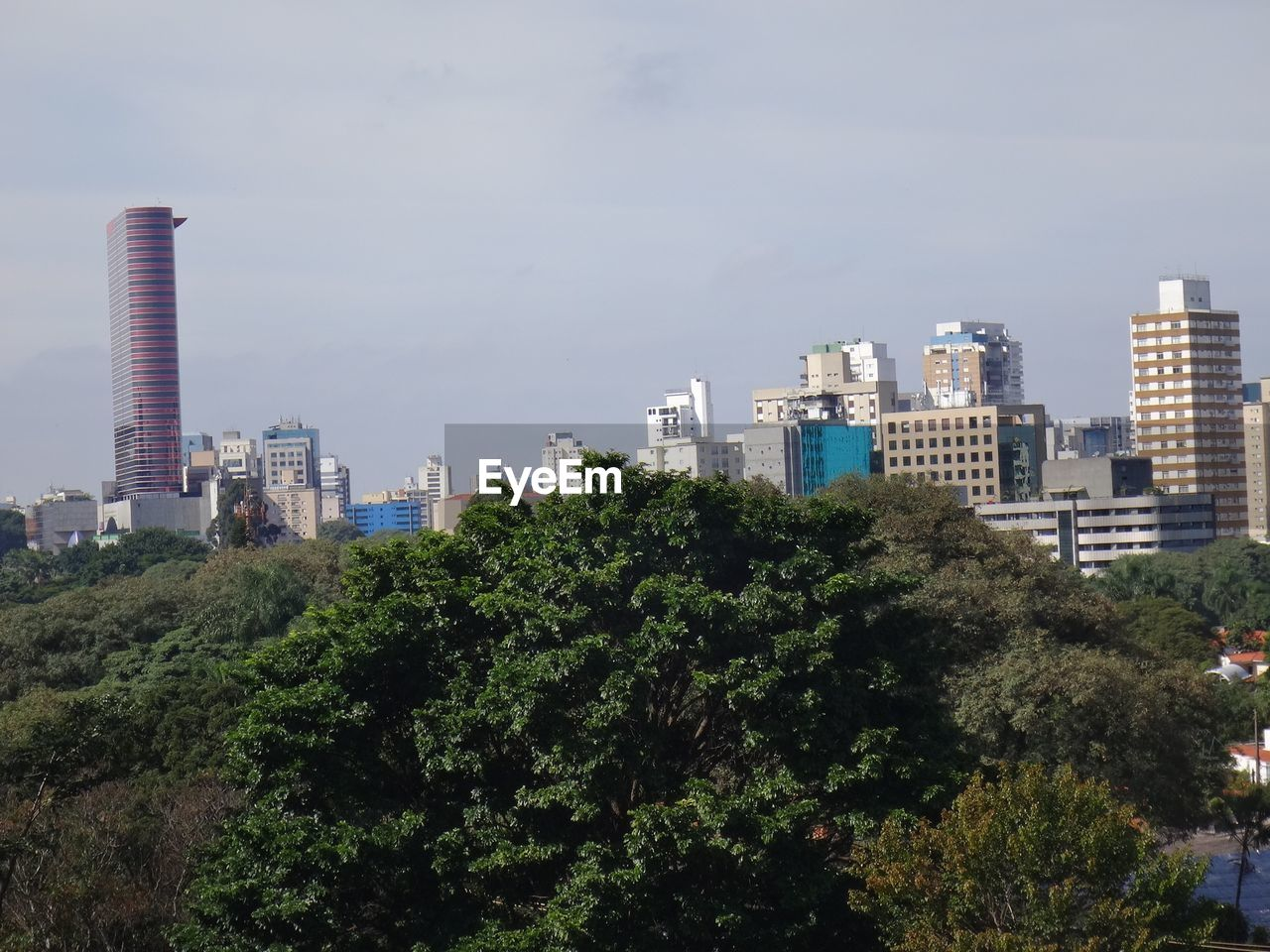 architecture, skyscraper, building exterior, tree, growth, built structure, no people, day, sky, green color, modern, city, outdoors, cityscape, tall, nature