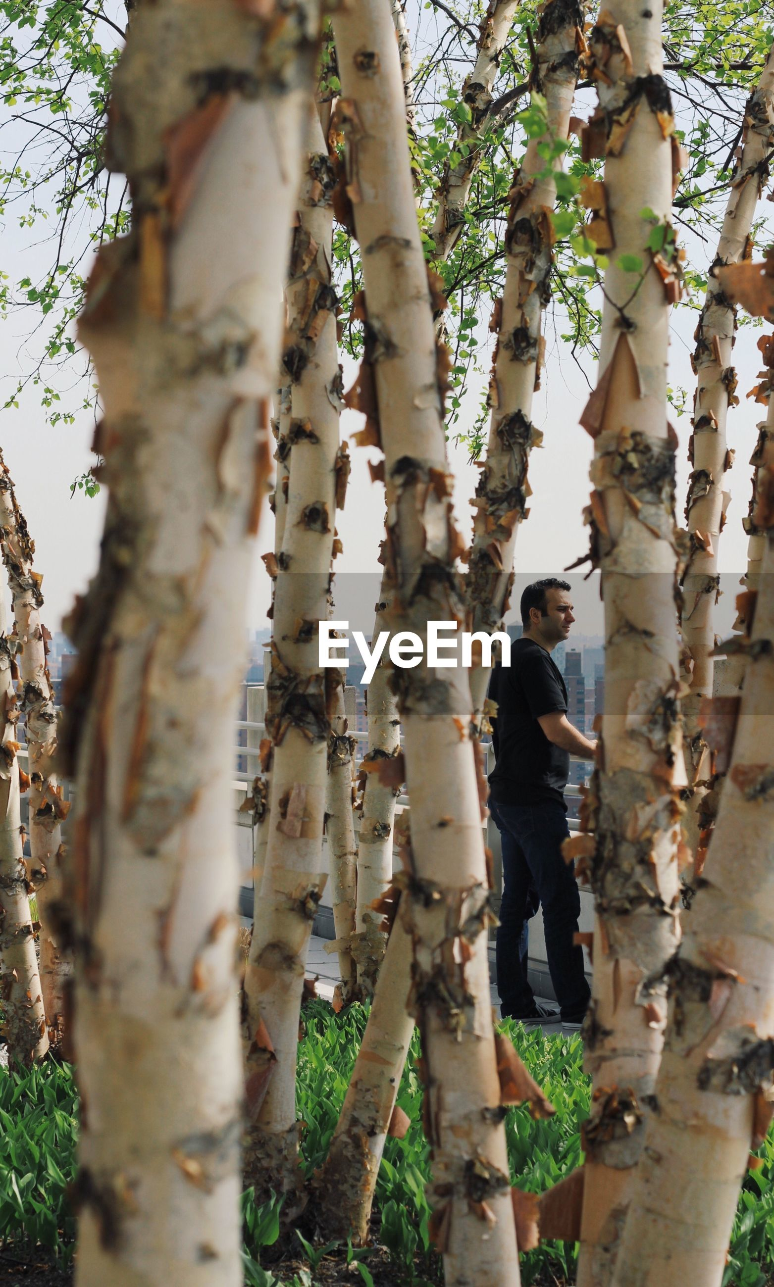 Man seen through birch trees in city