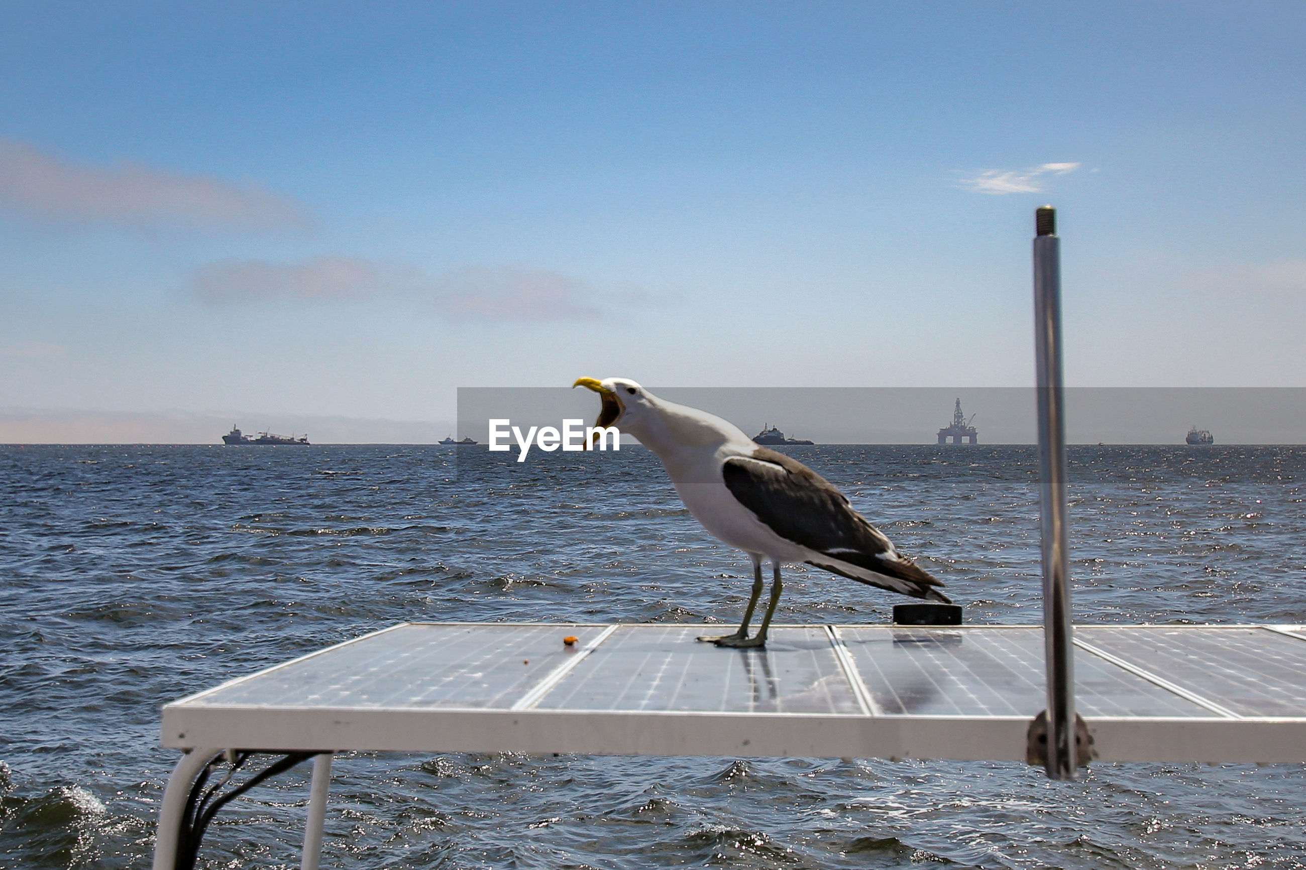 SEAGULL PERCHING ON A SEA SHORE AGAINST SKY