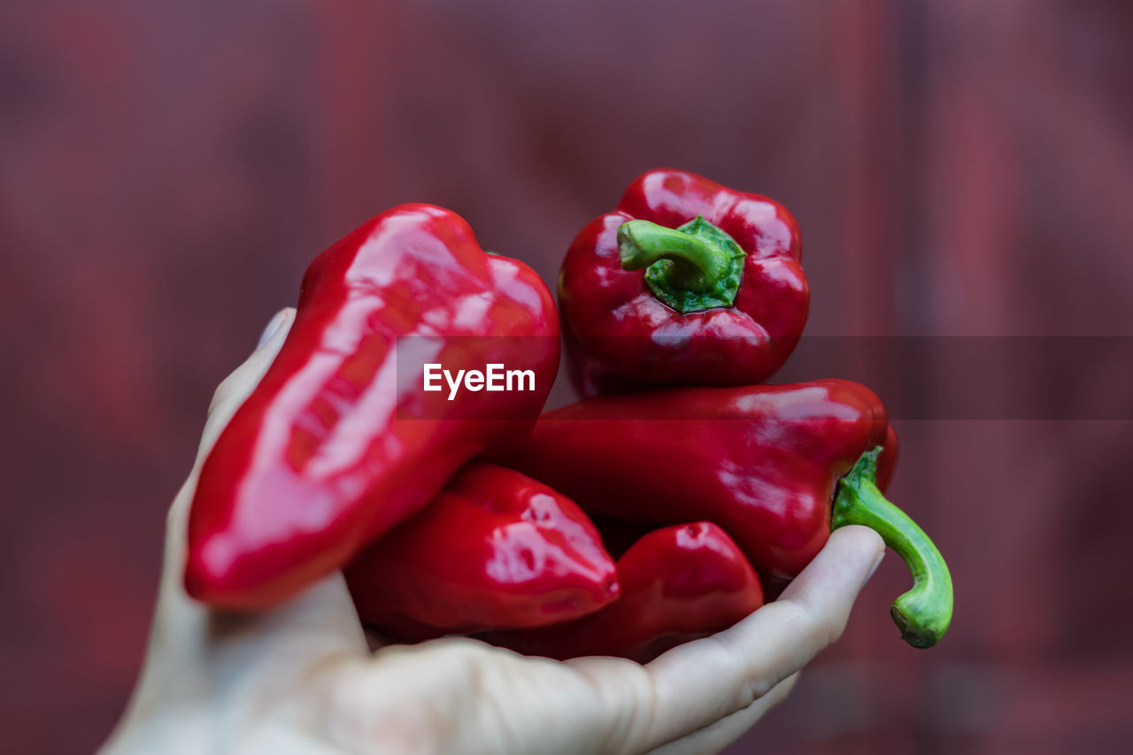 CLOSE-UP OF RED BELL PEPPERS AND CHILI PEPPER