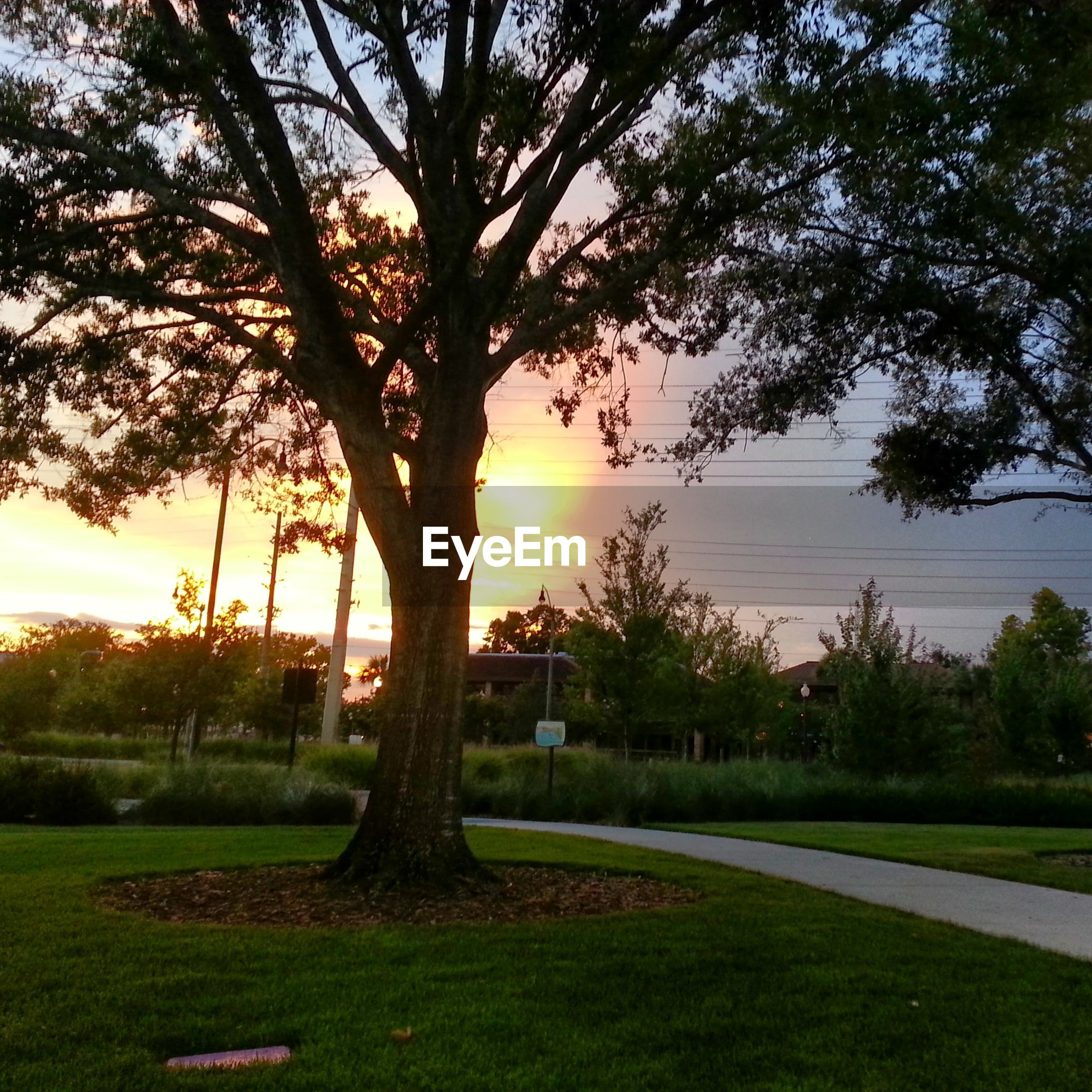 tree, grass, sunset, tranquility, tranquil scene, sun, scenics, beauty in nature, sky, sunlight, nature, landscape, field, growth, tree trunk, green color, idyllic, park - man made space, sunbeam, grassy