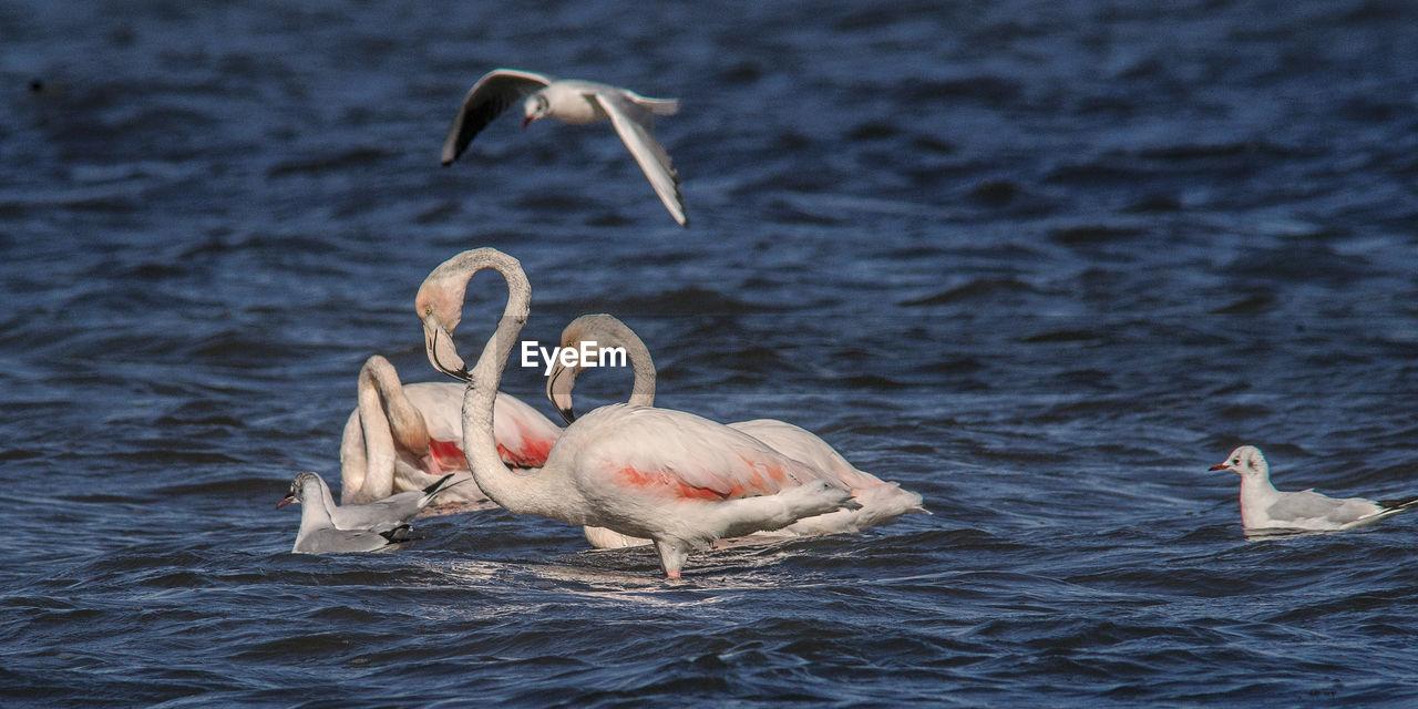 animals in the wild, bird, animal themes, animal wildlife, water, nature, waterfront, lake, water bird, no people, day, swan, beauty in nature, beak, outdoors, swimming