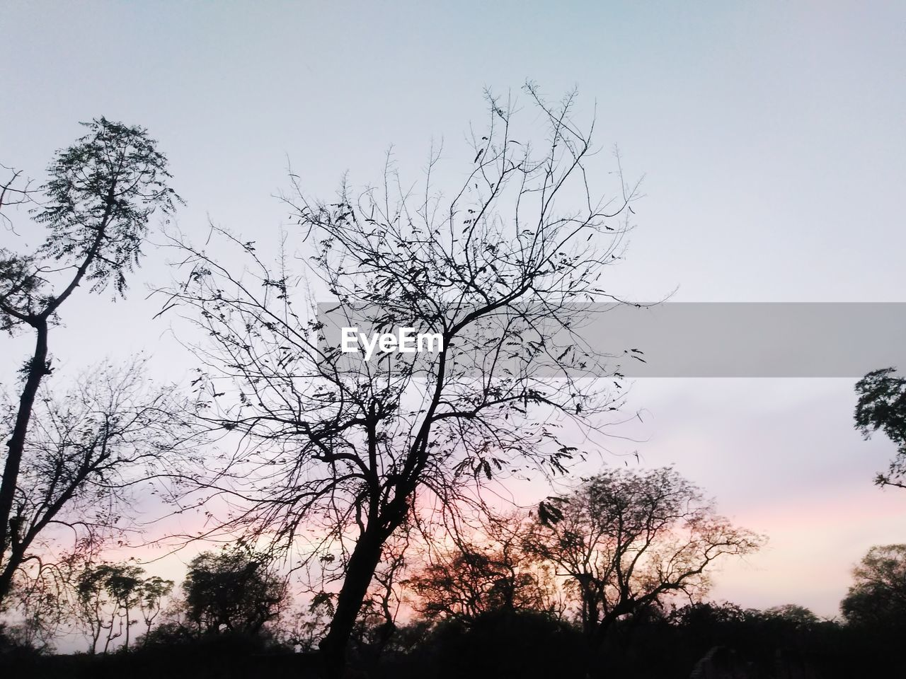 sky, tree, plant, beauty in nature, tranquility, silhouette, branch, sunset, bare tree, nature, no people, tranquil scene, scenics - nature, low angle view, growth, outdoors, cloud - sky, non-urban scene, land, environment