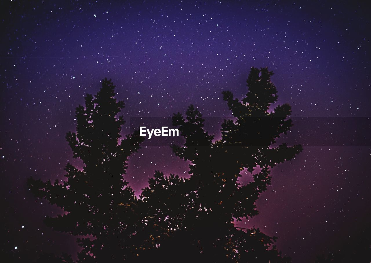 tree, star - space, night, low angle view, beauty in nature, nature, sky, astronomy, no people, scenics, tranquil scene, tranquility, star field, purple, silhouette, growth, constellation, galaxy, outdoors, space, starry, clear sky