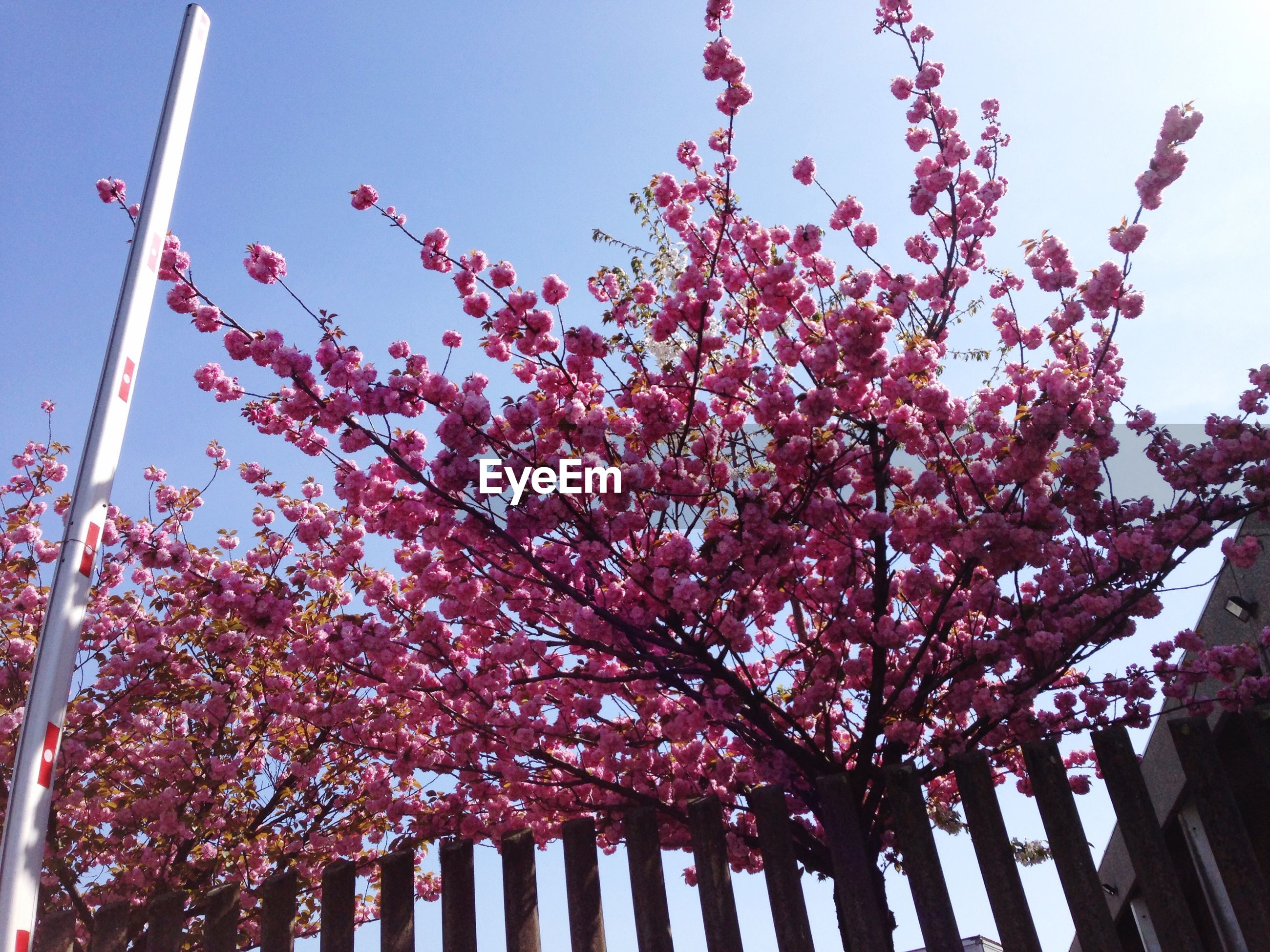 low angle view, tree, growth, sky, built structure, architecture, clear sky, branch, building exterior, flower, nature, day, outdoors, street light, no people, red, freshness, sunlight, beauty in nature, blossom