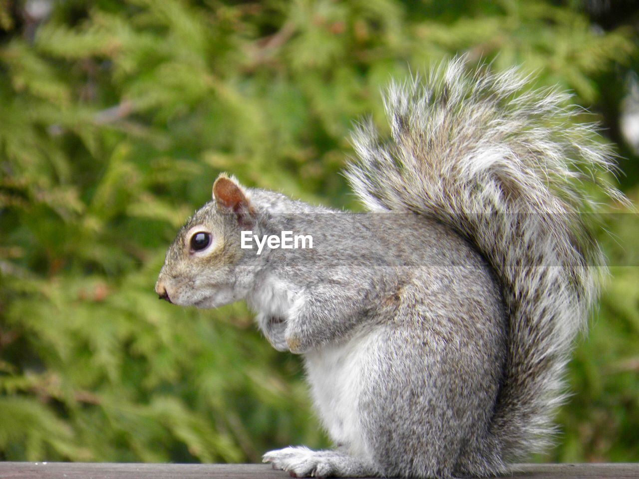 animal, animal themes, animal wildlife, one animal, animals in the wild, vertebrate, focus on foreground, close-up, rodent, mammal, squirrel, no people, side view, day, land, nature, plant, outdoors, field, looking, whisker