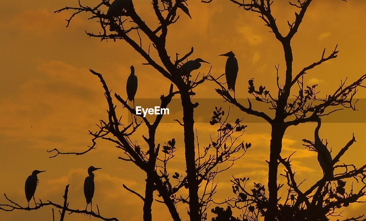 silhouette, tree, sky, sunset, branch, bird, plant, vertebrate, no people, bare tree, animals in the wild, nature, animal themes, animal wildlife, beauty in nature, animal, perching, low angle view, cloud - sky, orange color, outdoors