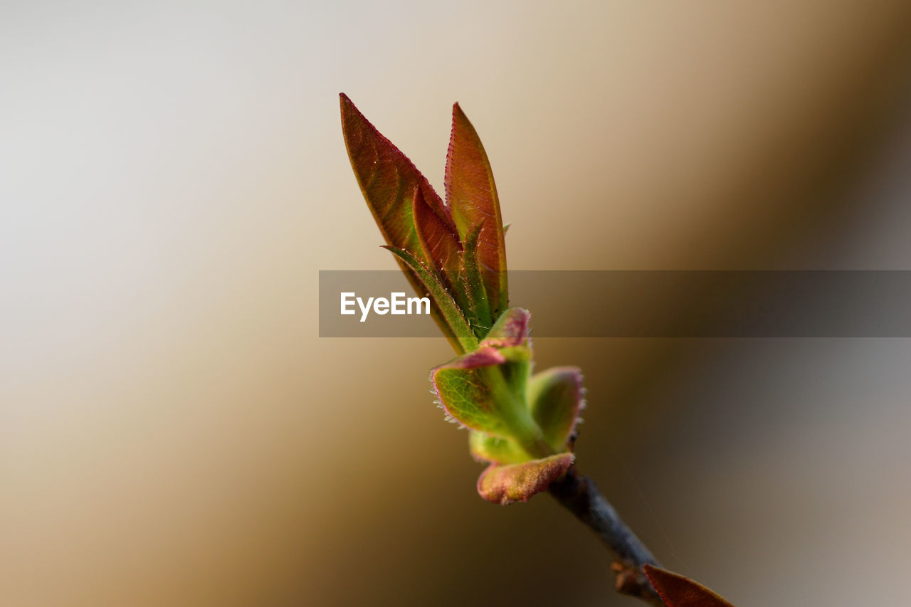 growth, nature, no people, plant, close-up, leaf, fragility, outdoors, day, beauty in nature, freshness