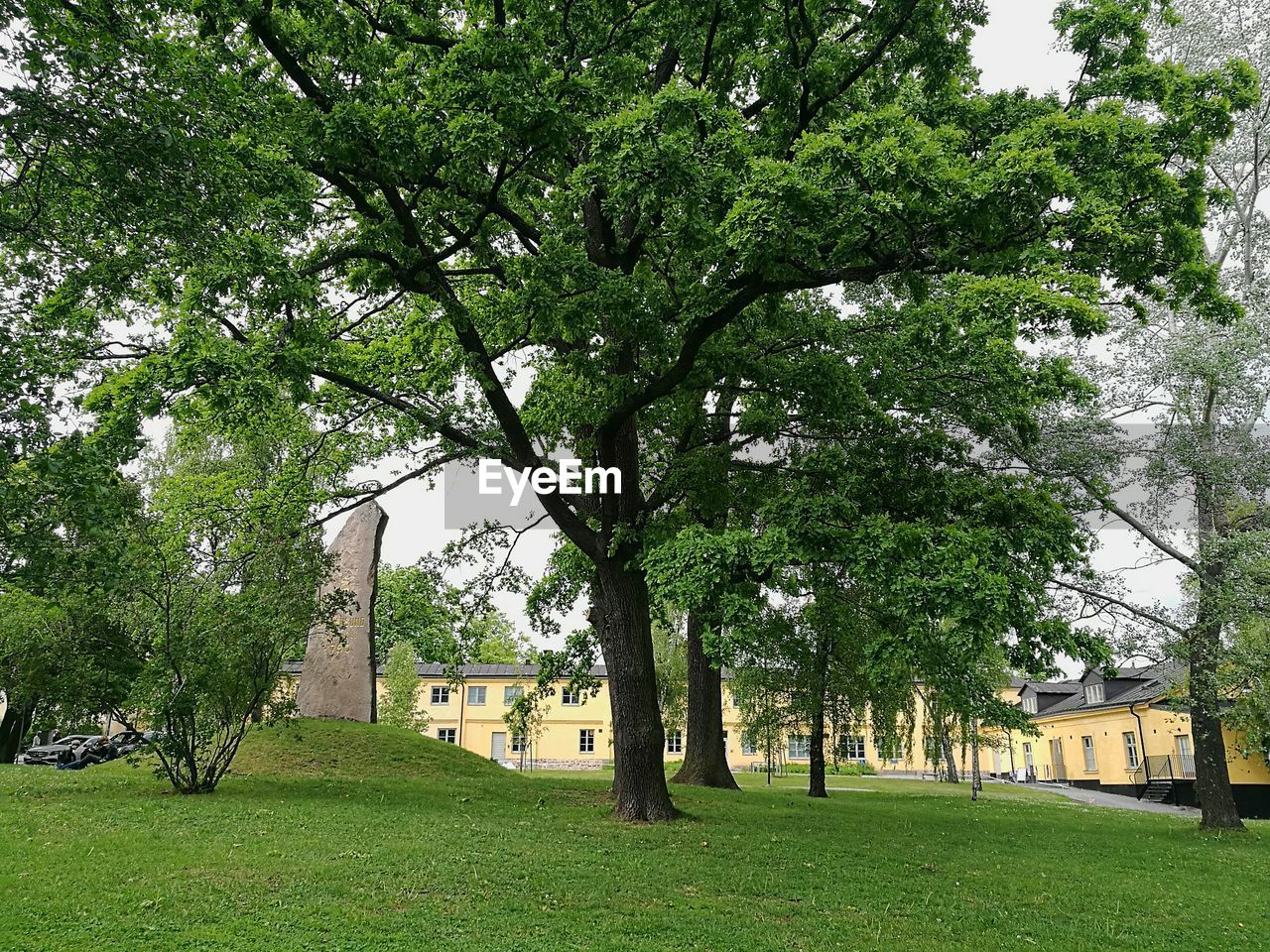 tree, green, growth, grass, green color, architecture, building exterior, built structure, nature, no people, branch, beauty in nature, day, outdoors, sky