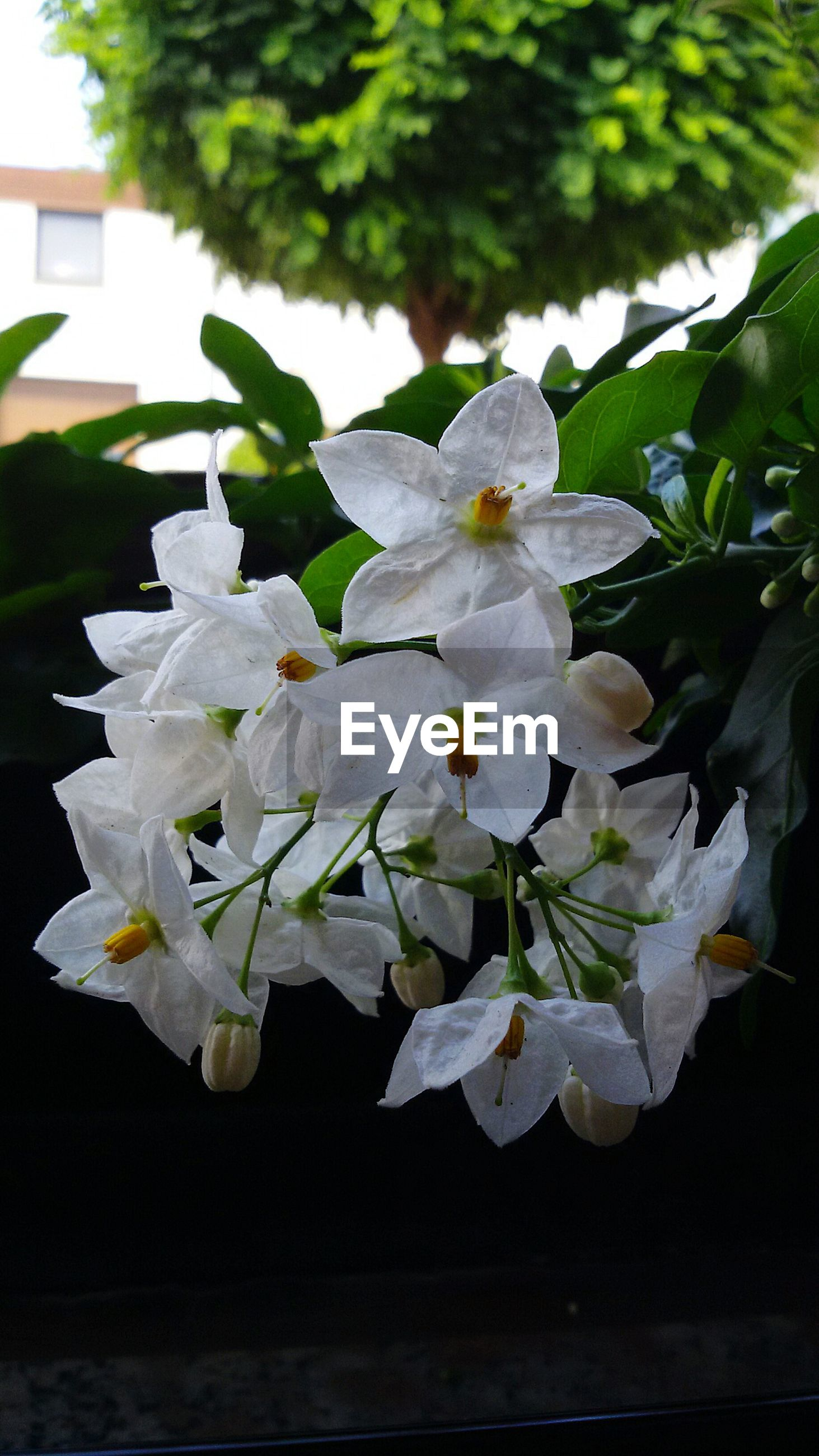 flower, freshness, white color, petal, fragility, growth, leaf, flower head, beauty in nature, close-up, plant, nature, blooming, focus on foreground, in bloom, blossom, white, botany, no people, indoors